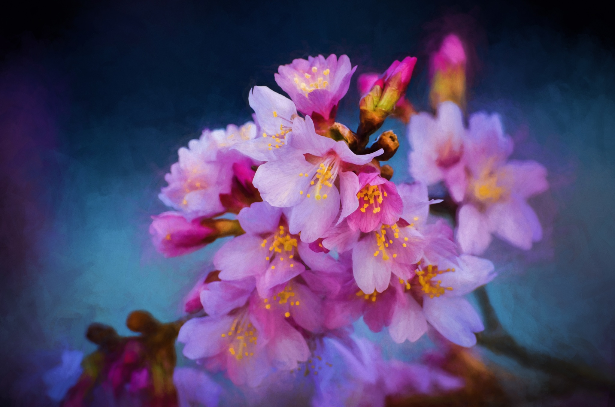 Cherry Blossoms 22 by JohnEllingson