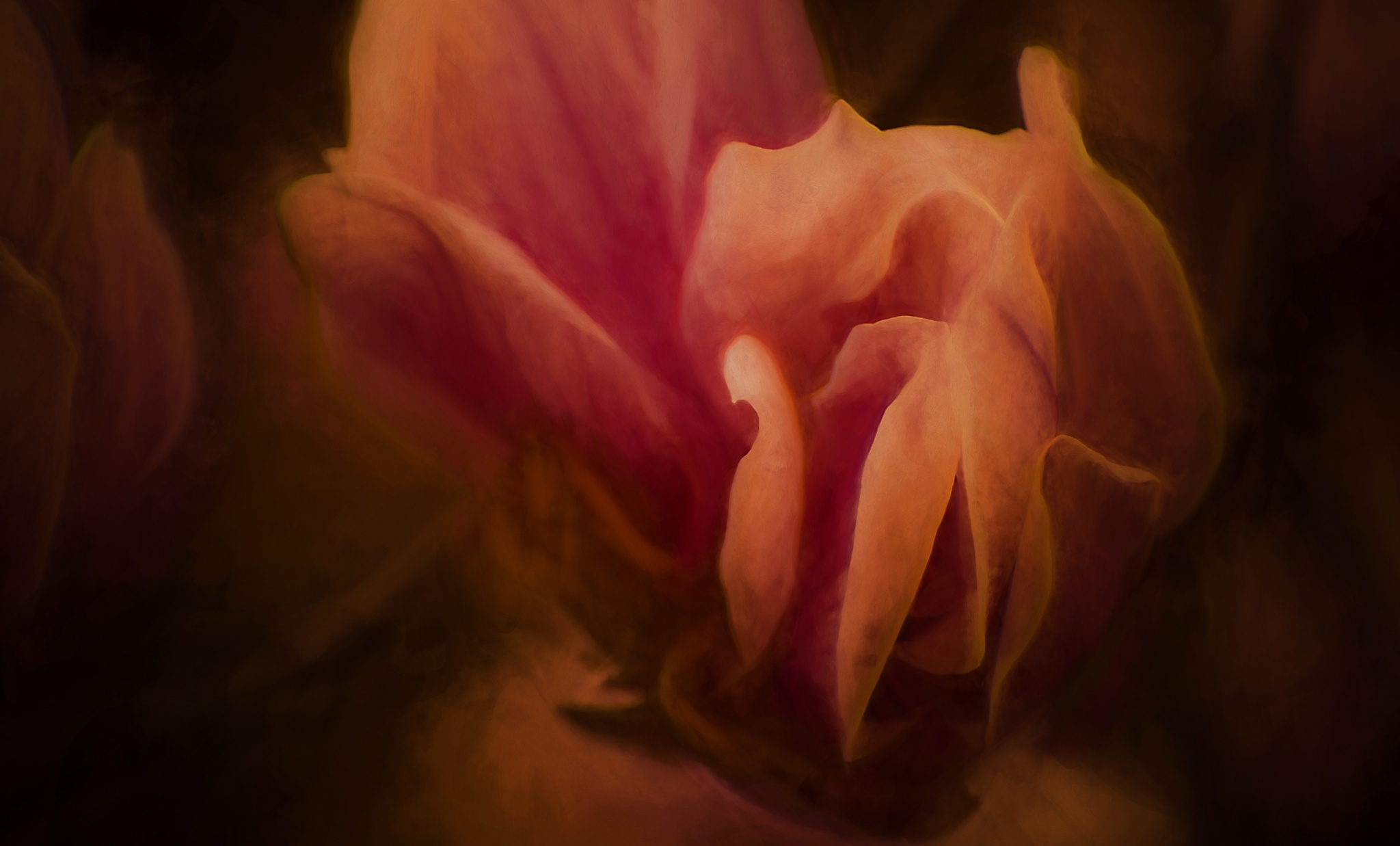 Magnolia Dreams 431 by JohnEllingson