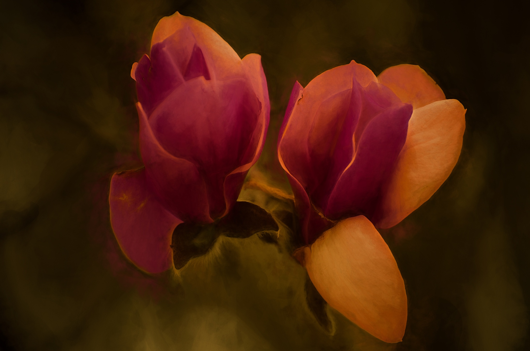 Magnolia Dreams 435 by JohnEllingson