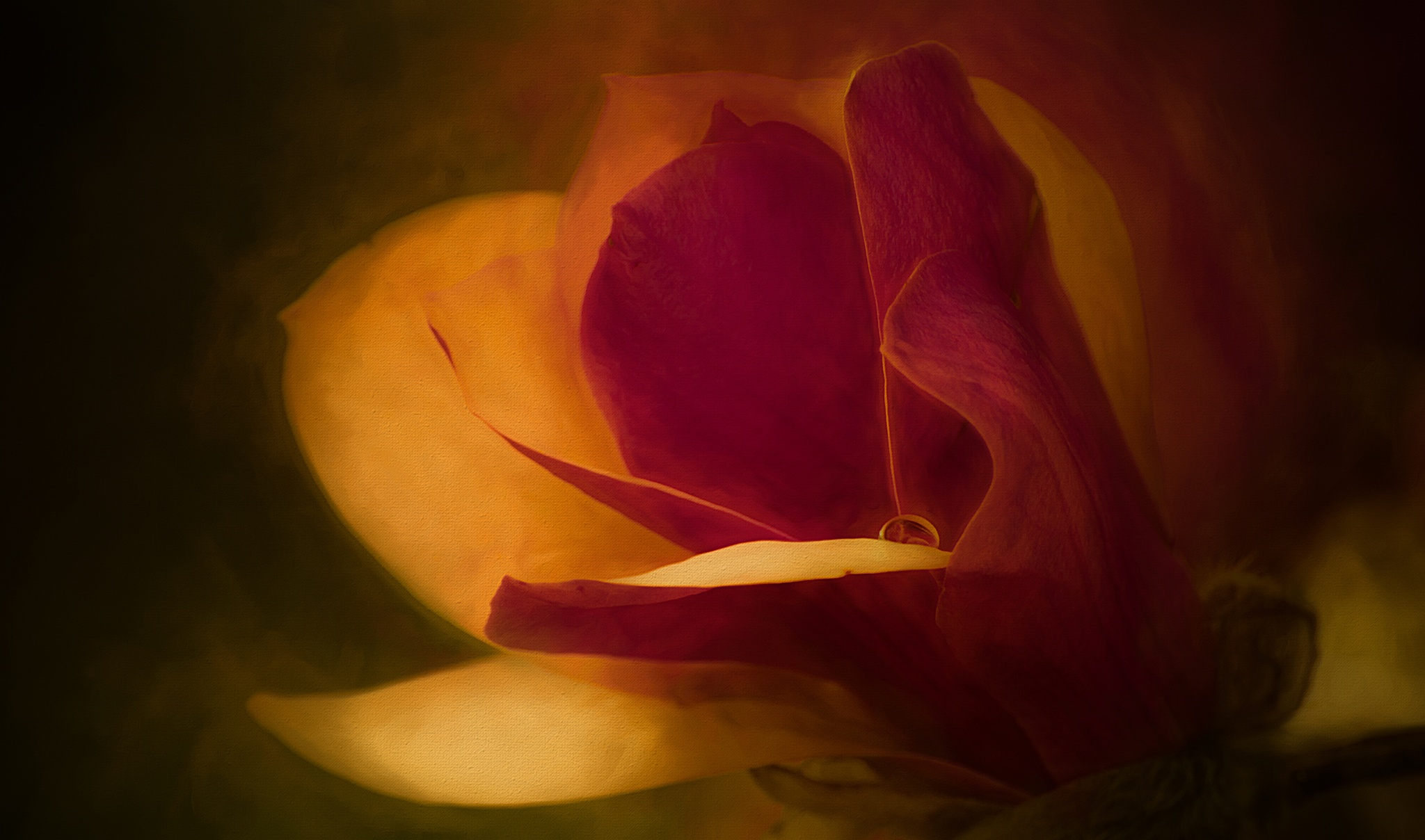 Magnolia Dreams 434 by JohnEllingson