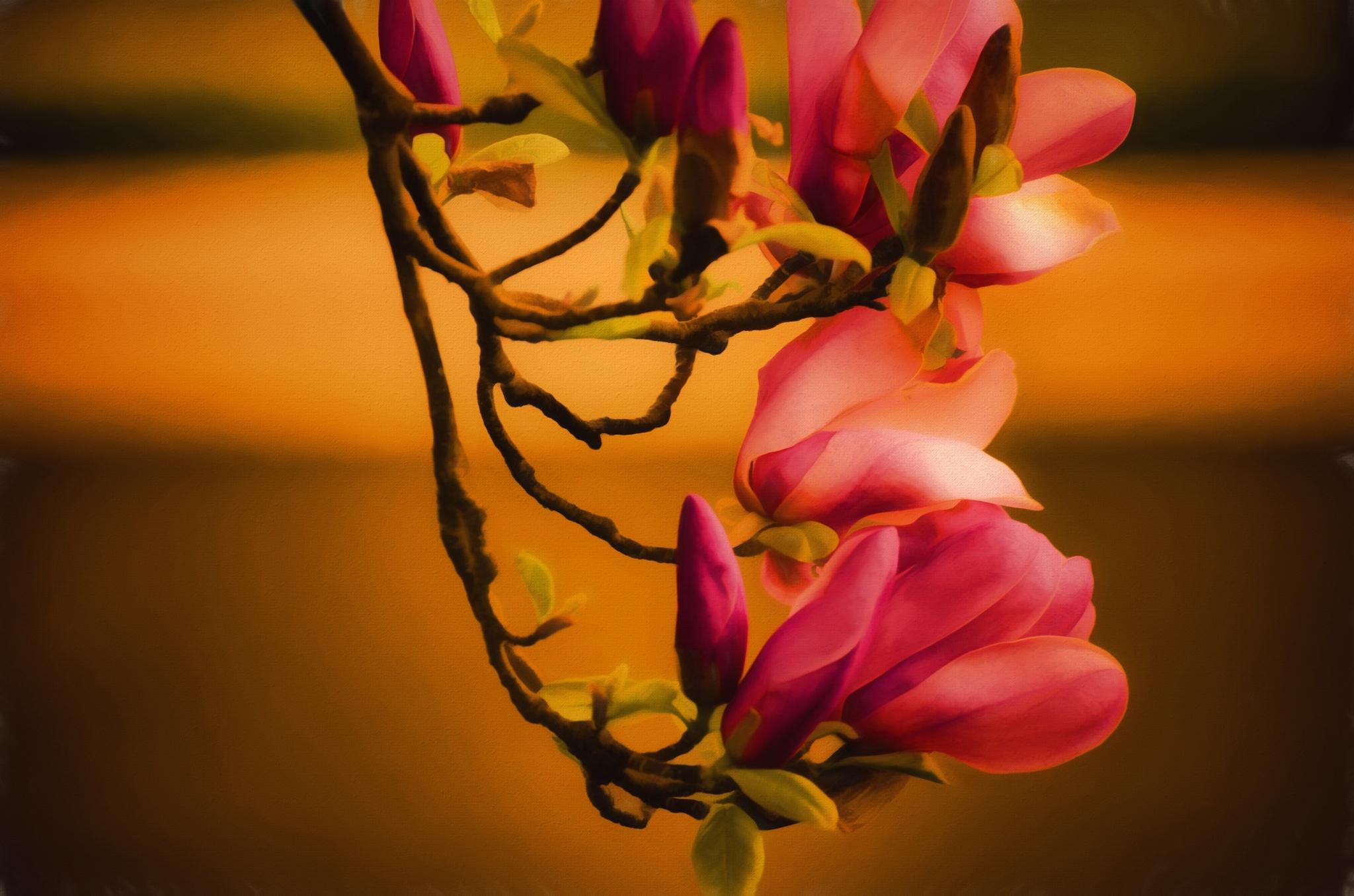 Magnolia Dreams 4310 by JohnEllingson