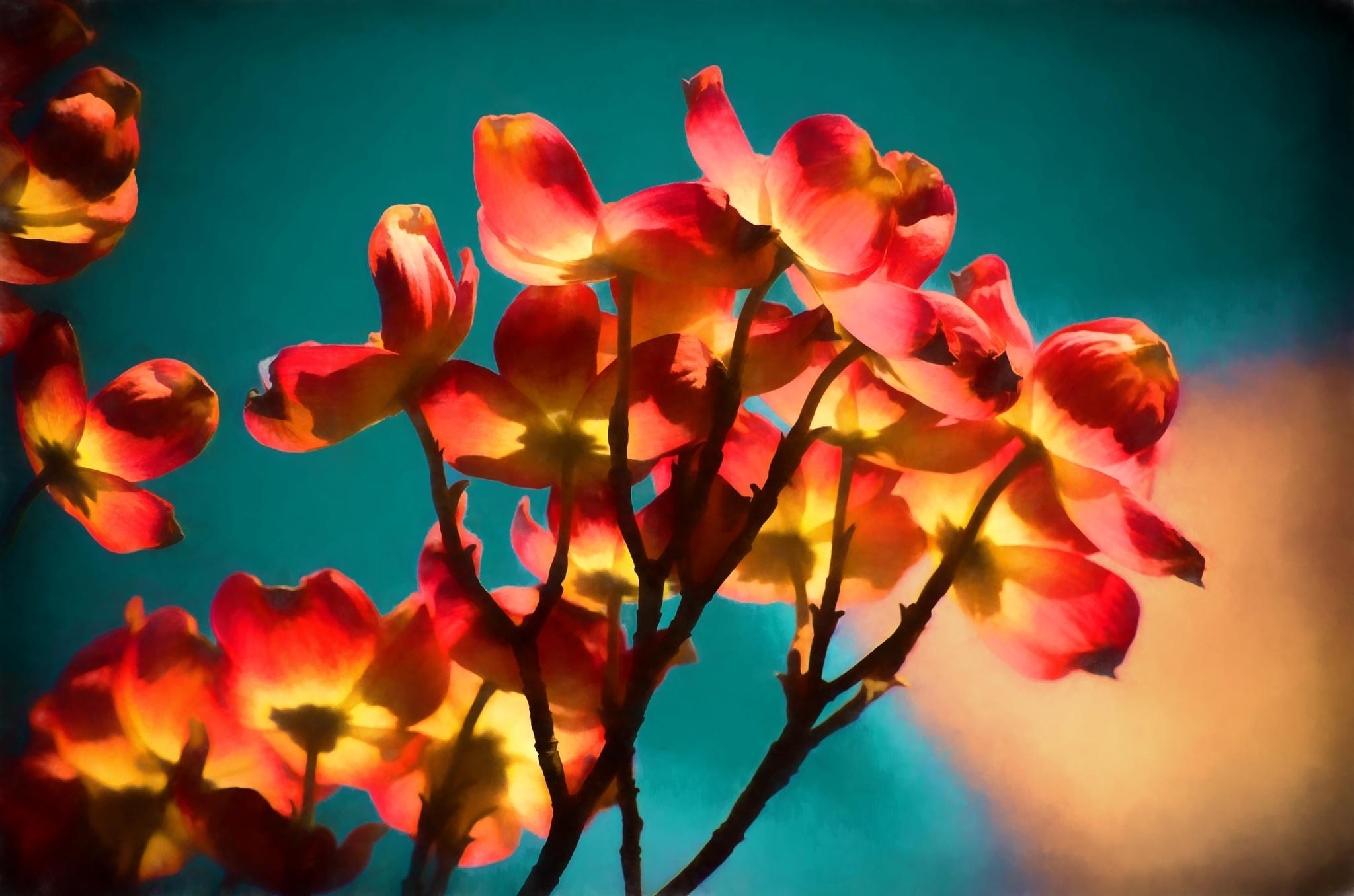 Pink Dogwood 1 by JohnEllingson