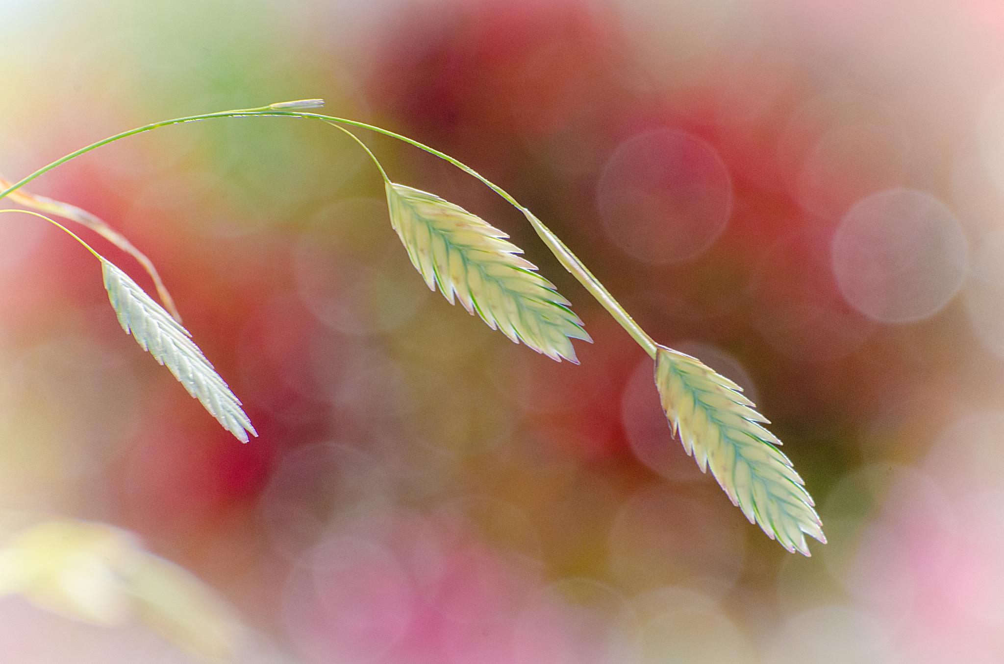 Late Summer Grasses II by JohnEllingson