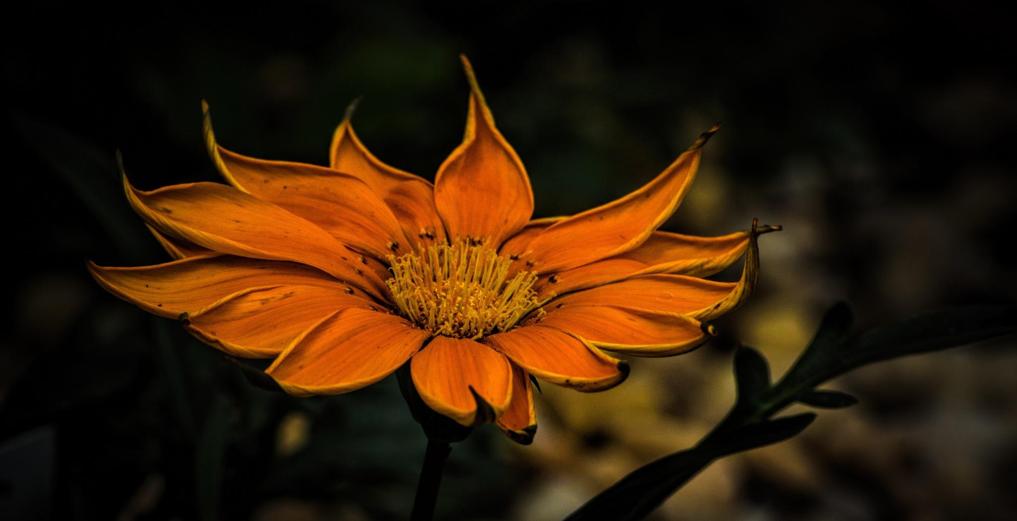 Orange Curl by JohnEllingson