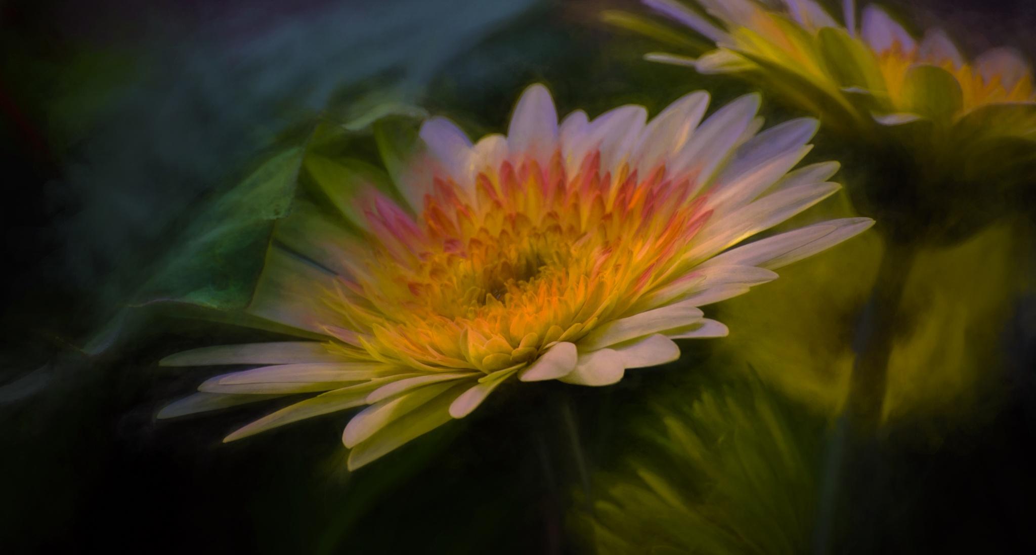Garden Light by JohnEllingson