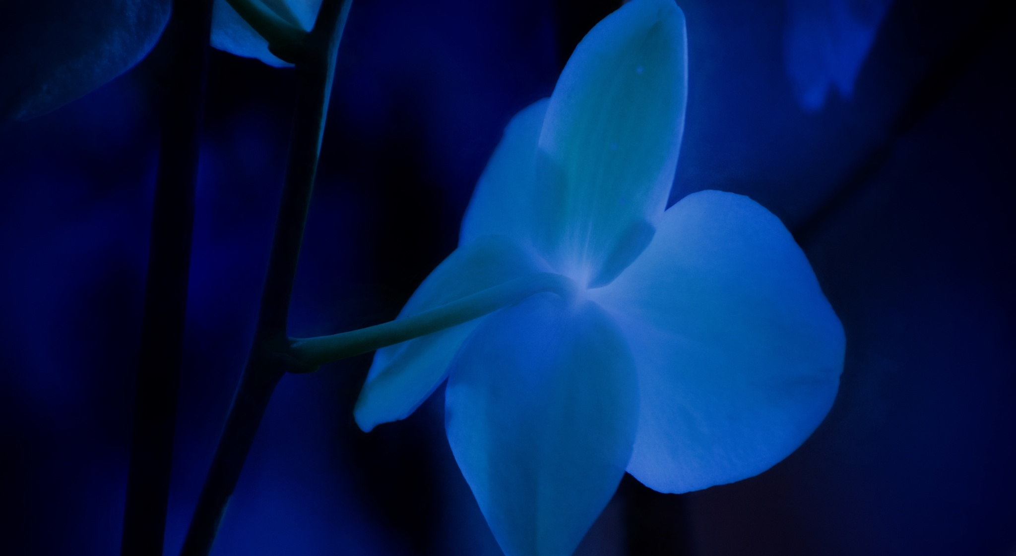 Orchid Glow by JohnEllingson