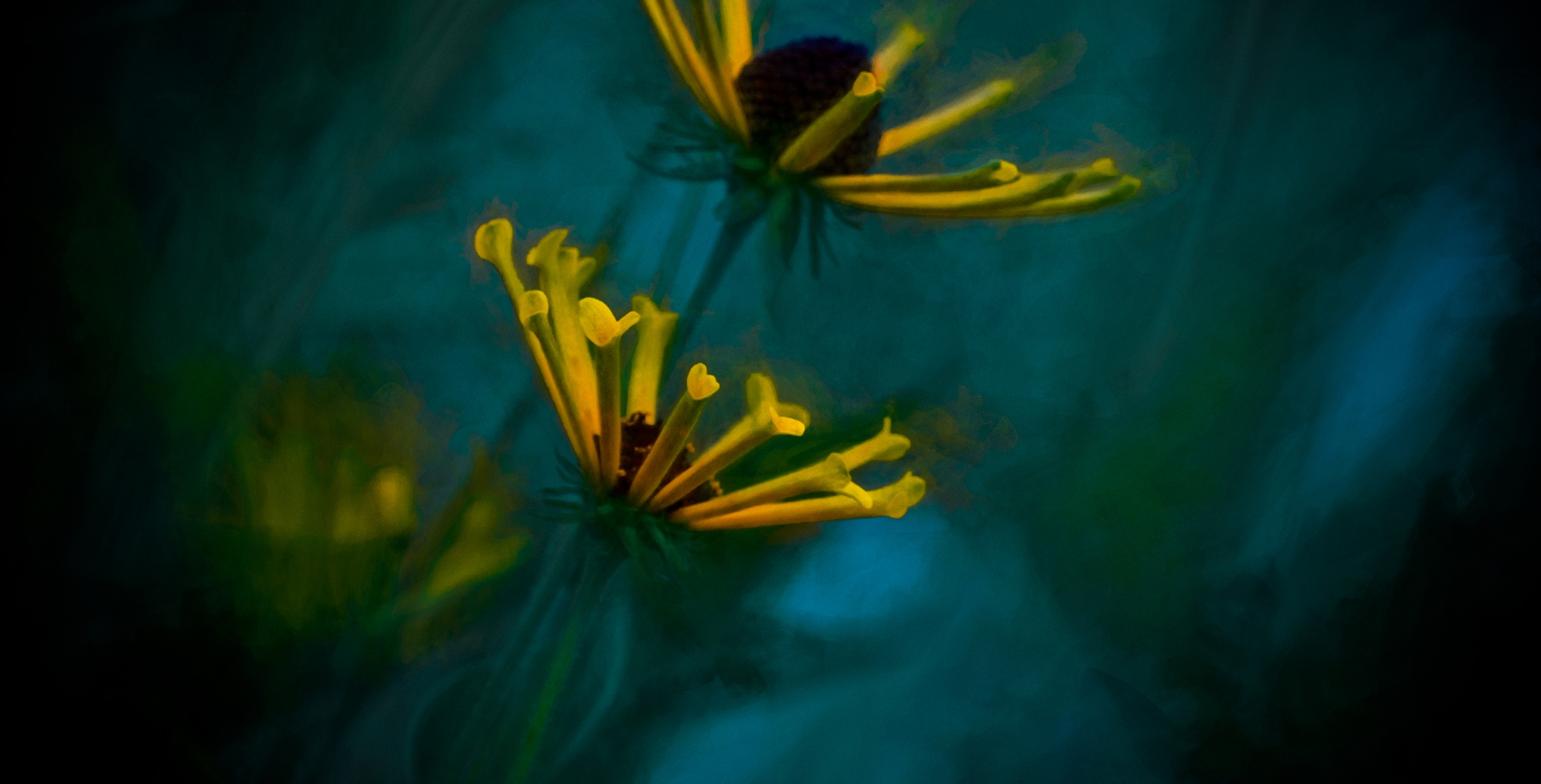 Coneflower Fantasy XIX by JohnEllingson
