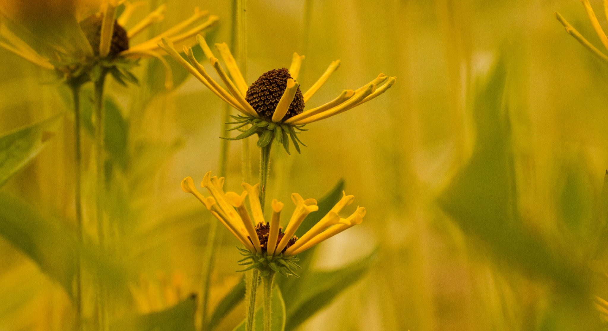 Yellow World by JohnEllingson