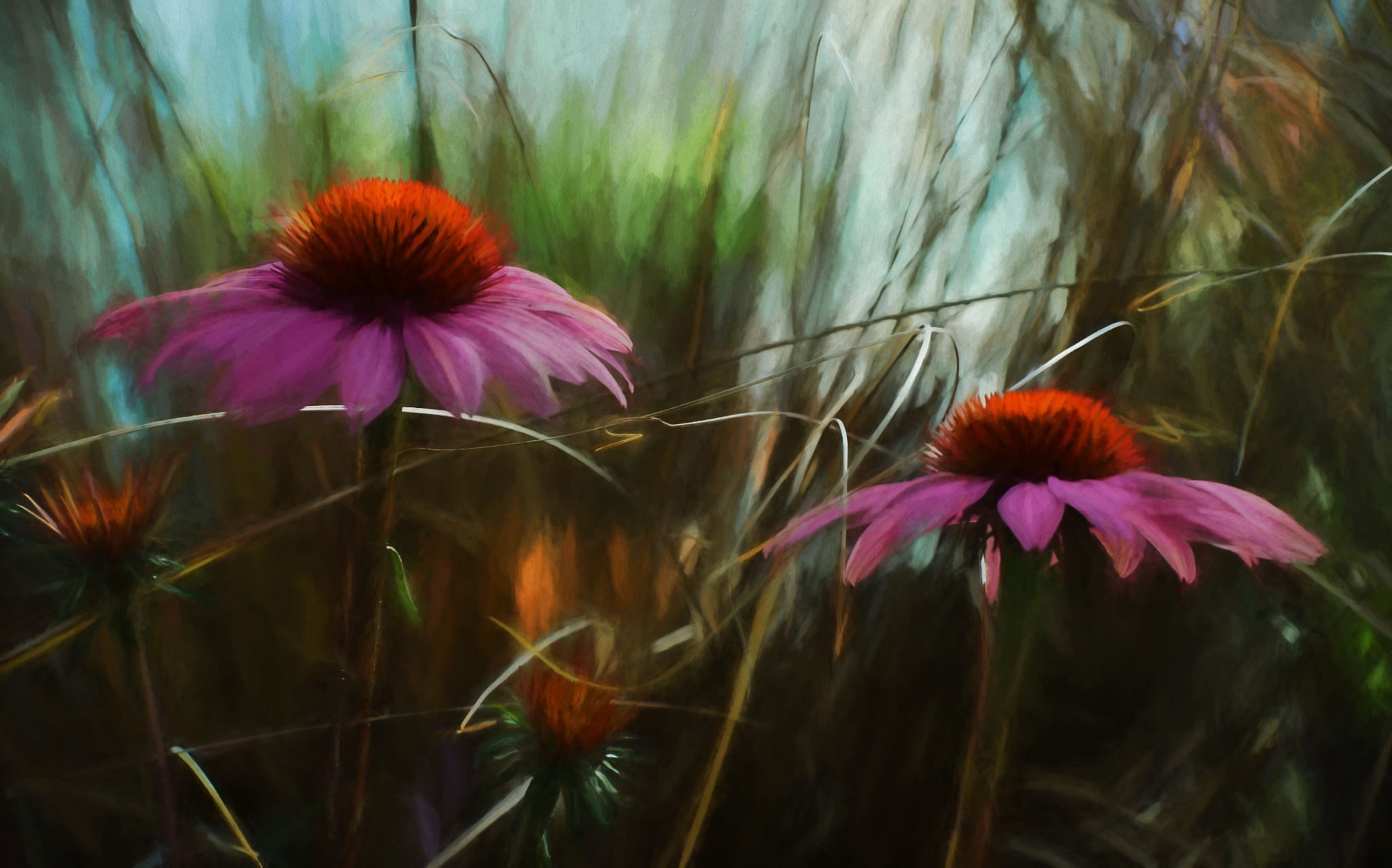 Coneflower Medly by JohnEllingson