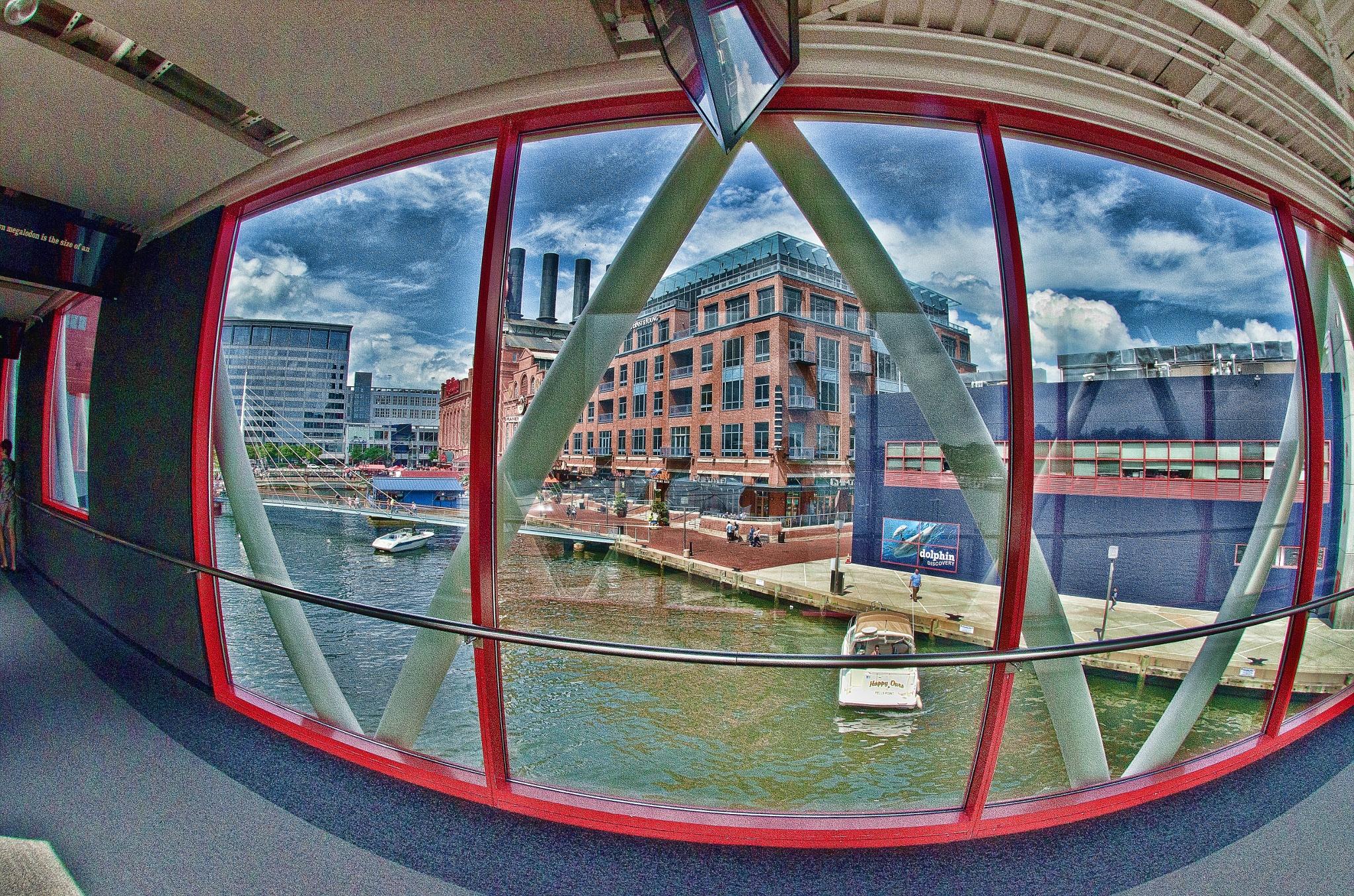 Baltimore Aquarium IV by JohnEllingson