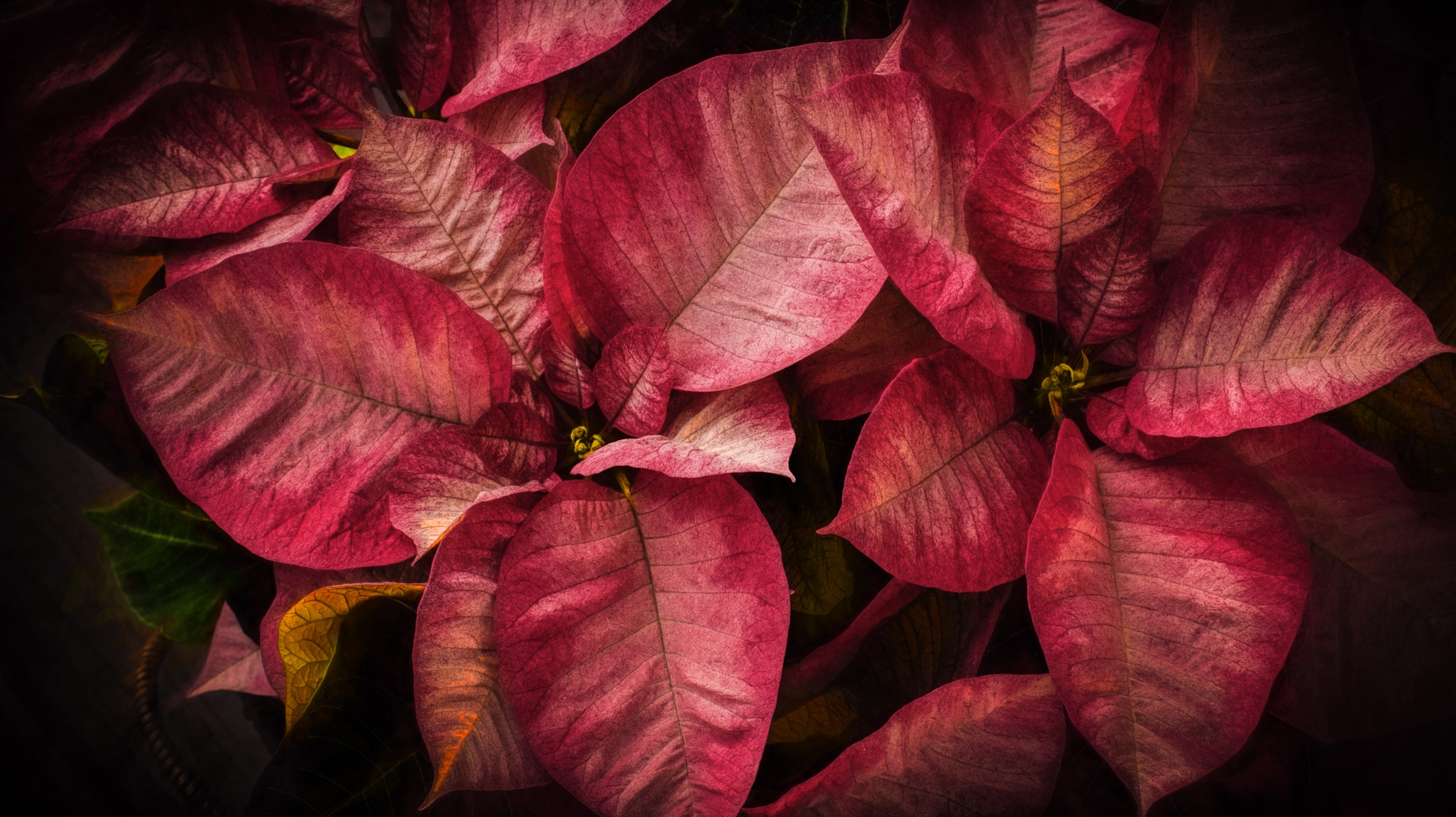 Holiday Trappings by JohnEllingson