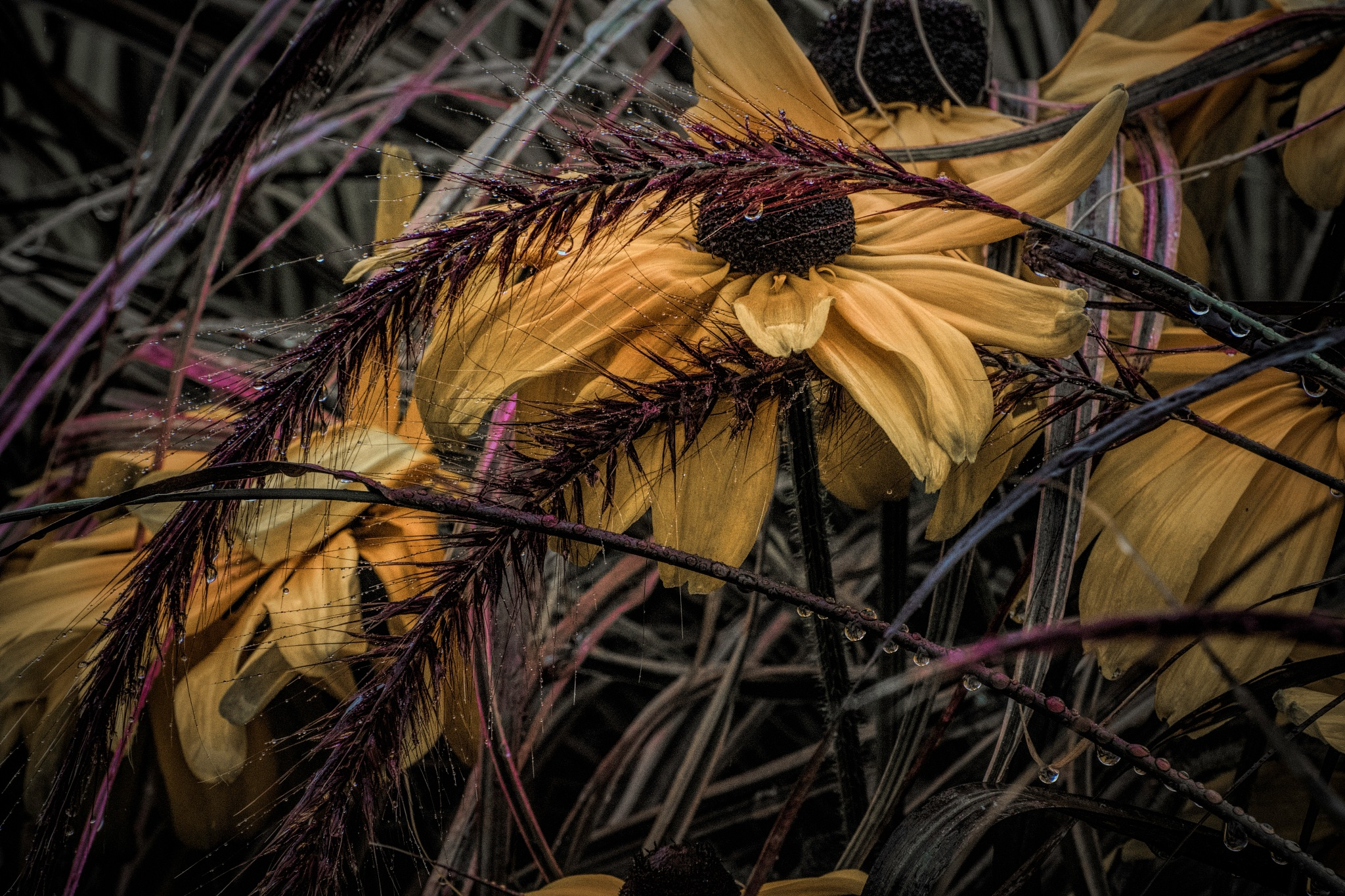Flower 9-2-22 by JohnEllingson