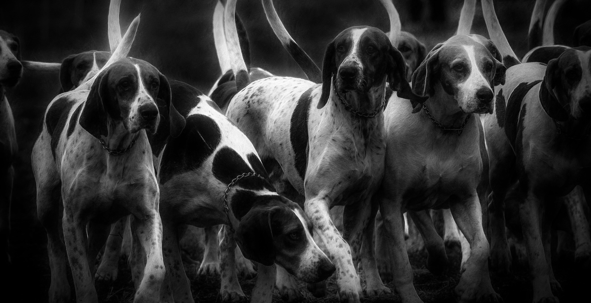 Hounds 3 by JohnEllingson