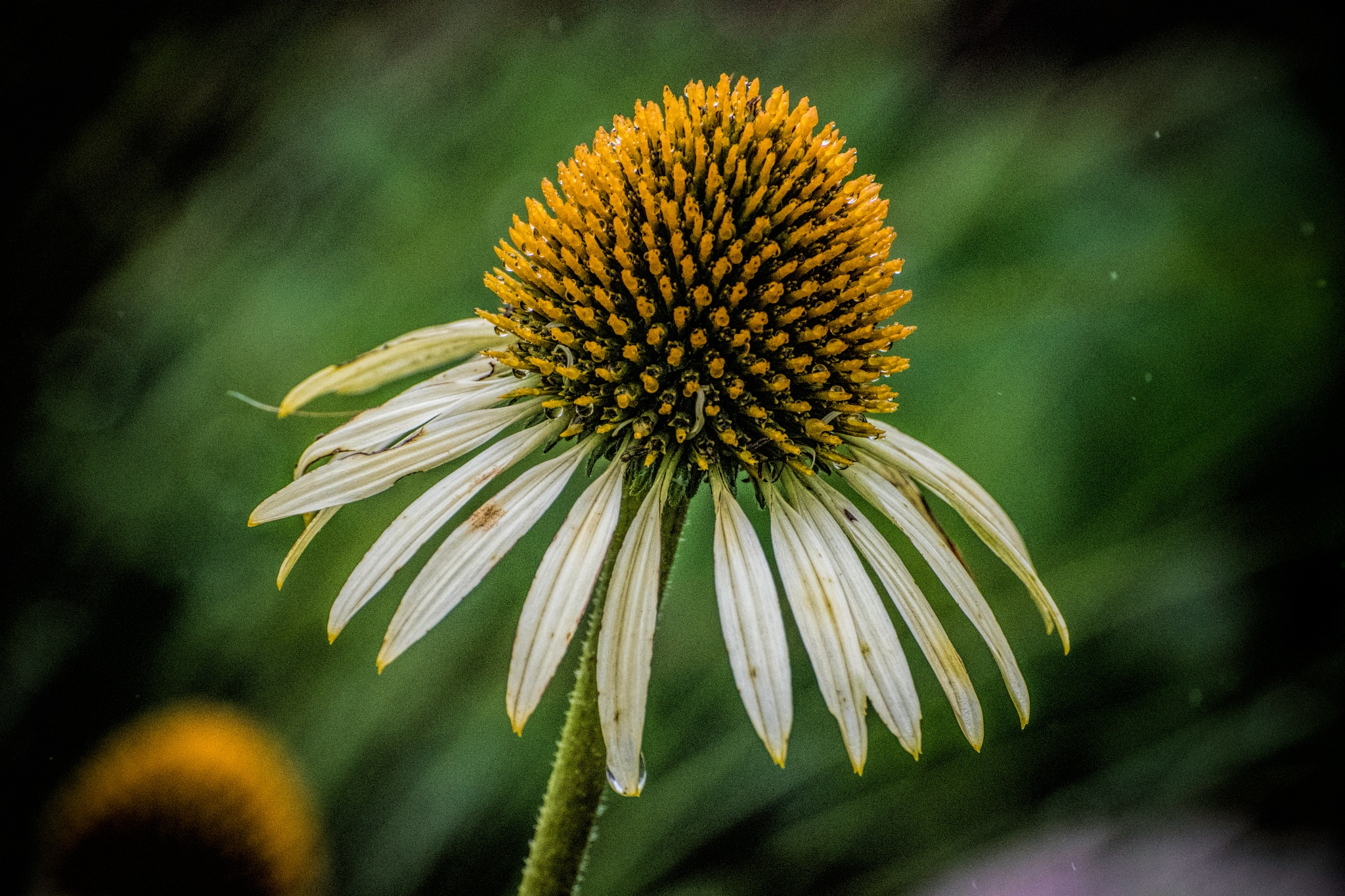 Flower 9-2-10 by JohnEllingson