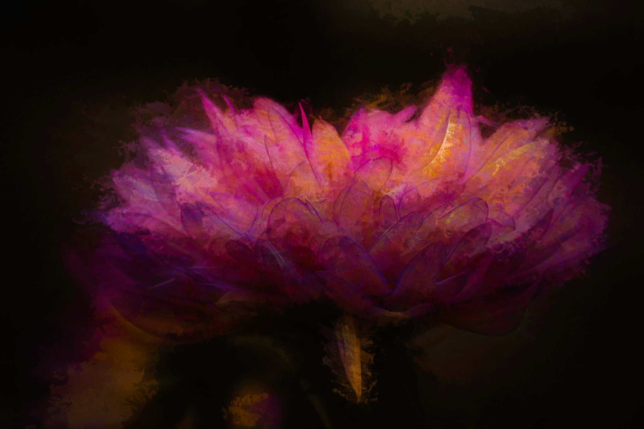 New Dahlia 5 by JohnEllingson