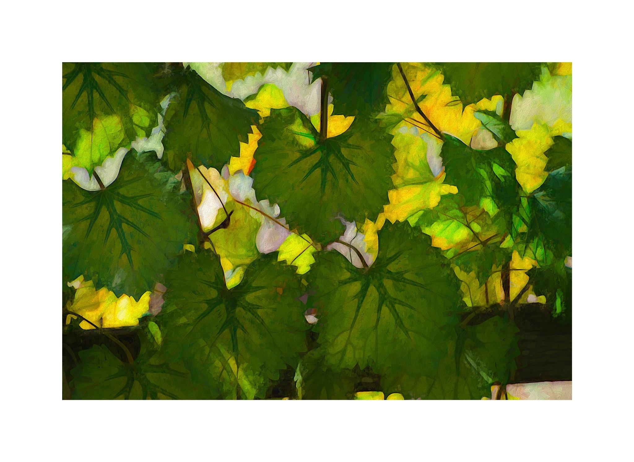 In Martha's Vineyard by JohnEllingson