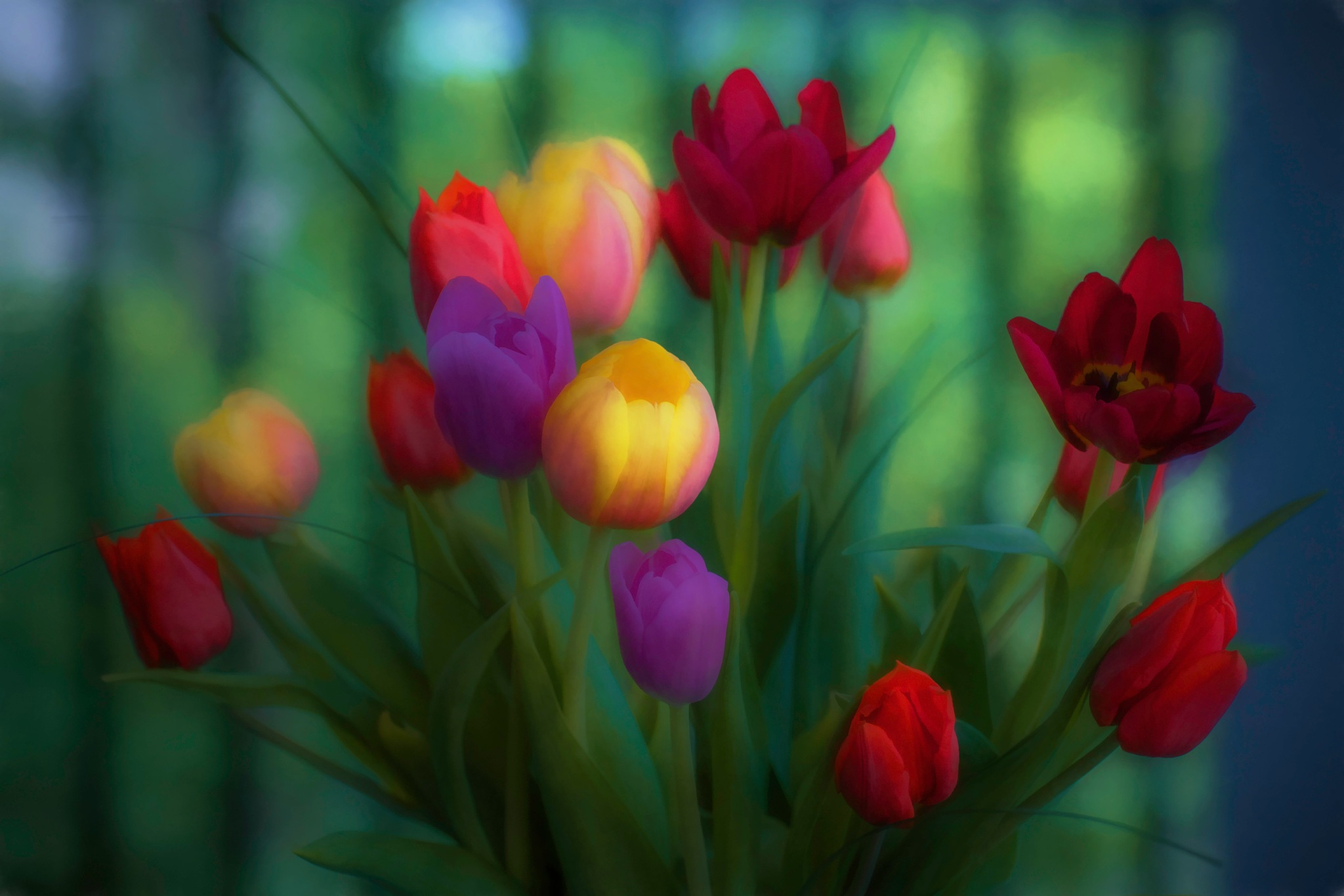 Tulip Time  4 by JohnEllingson