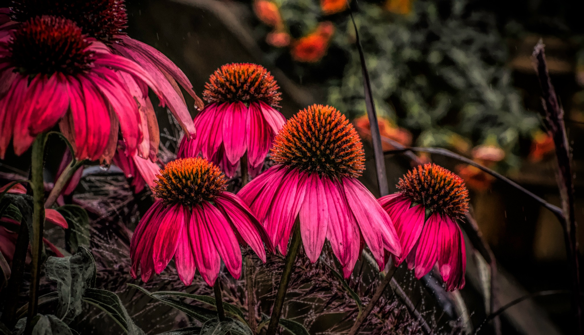 Flower 9-2-25 by JohnEllingson