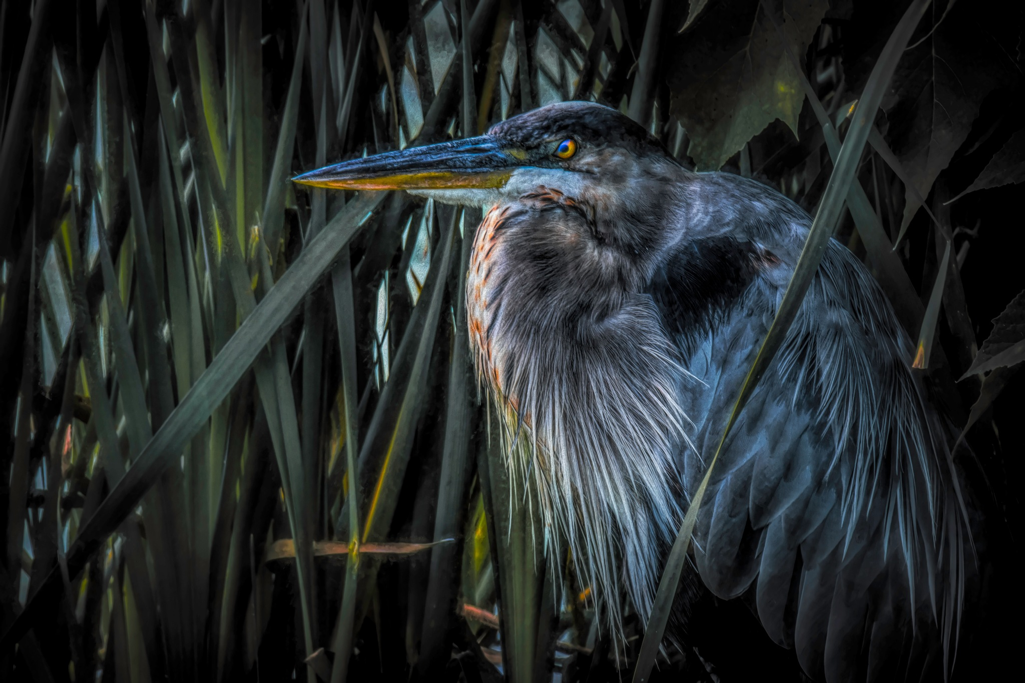 Heron 1 by JohnEllingson