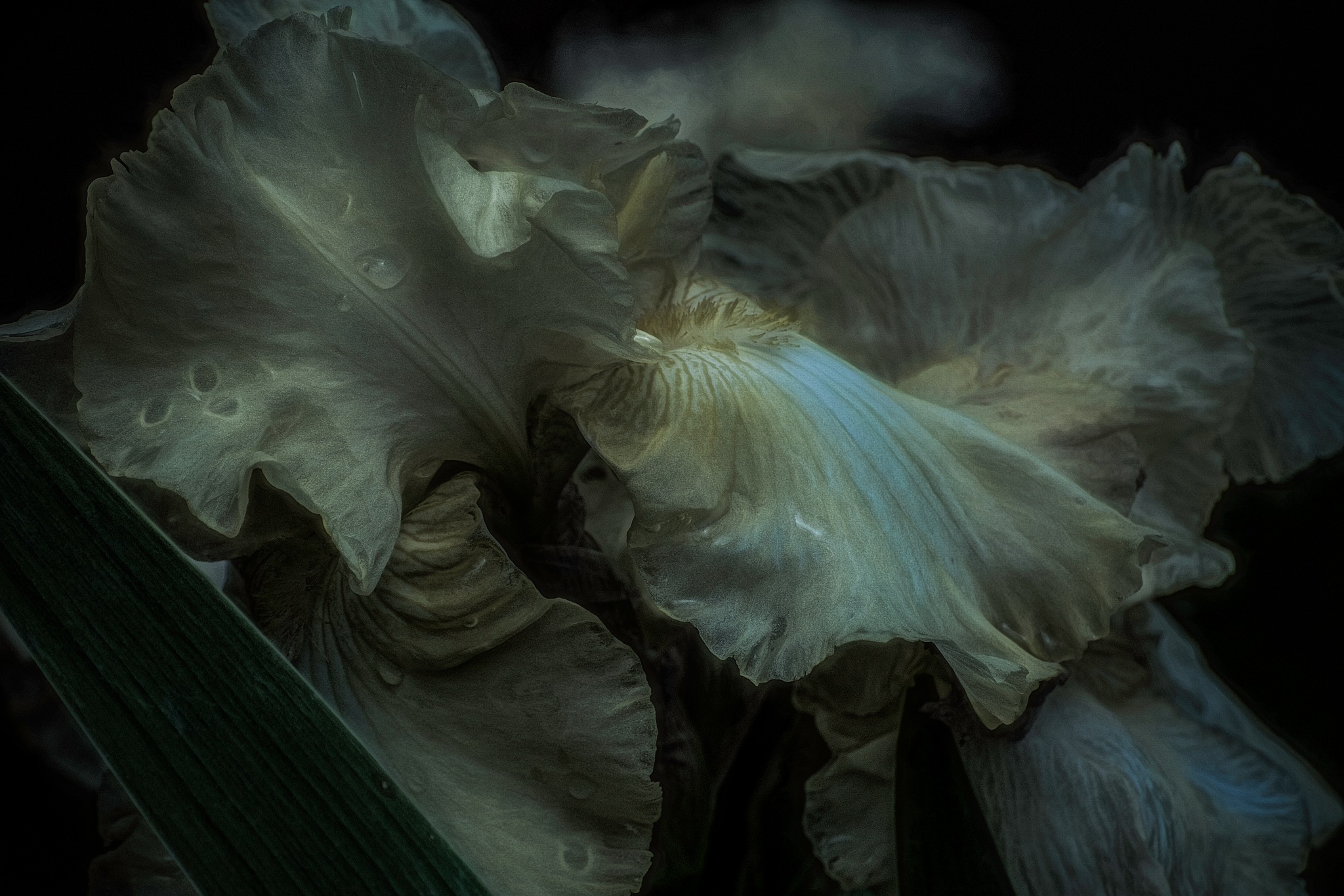 One More Dark Iris by JohnEllingson