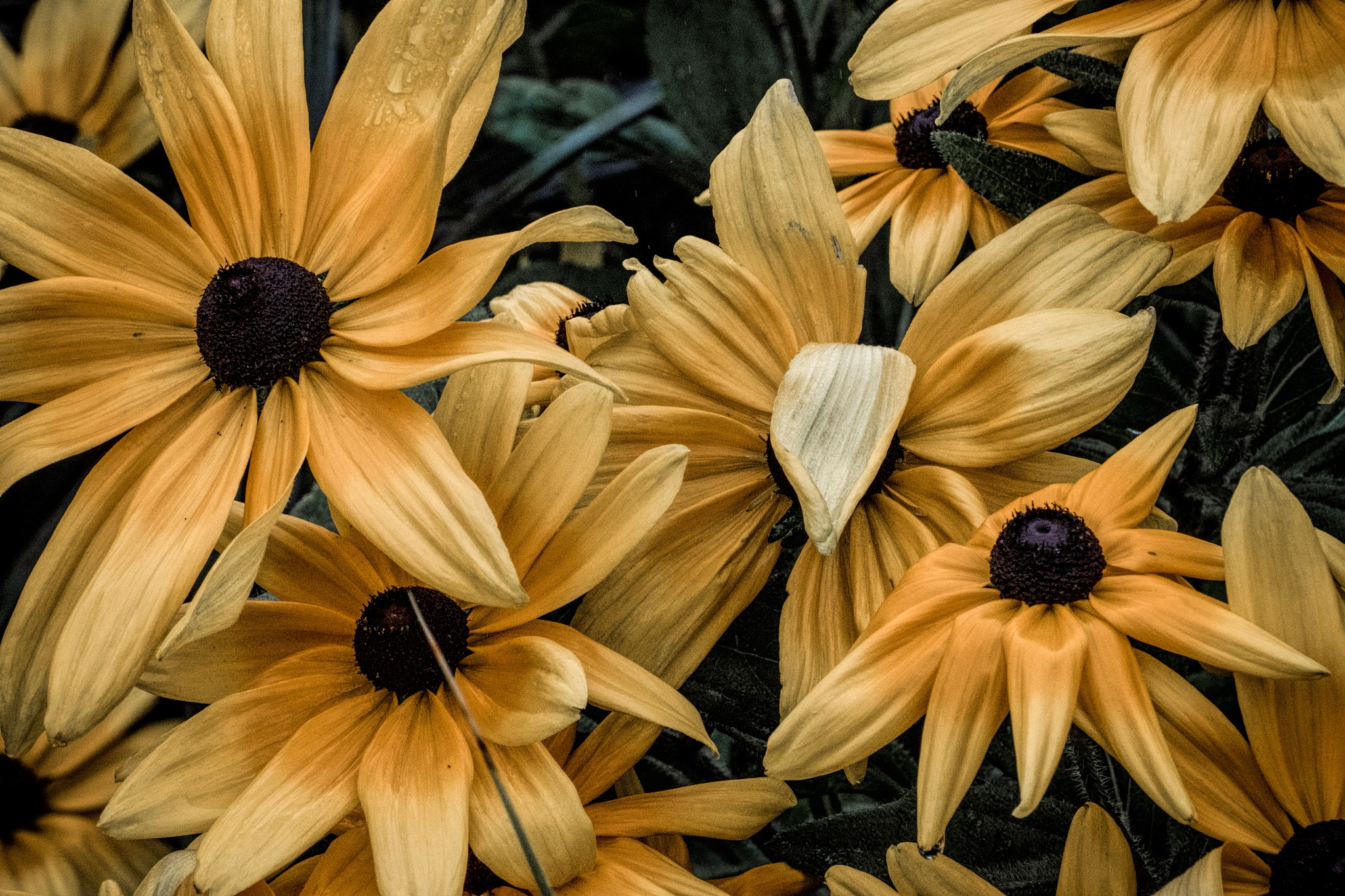 Flower 9-2-31 by JohnEllingson