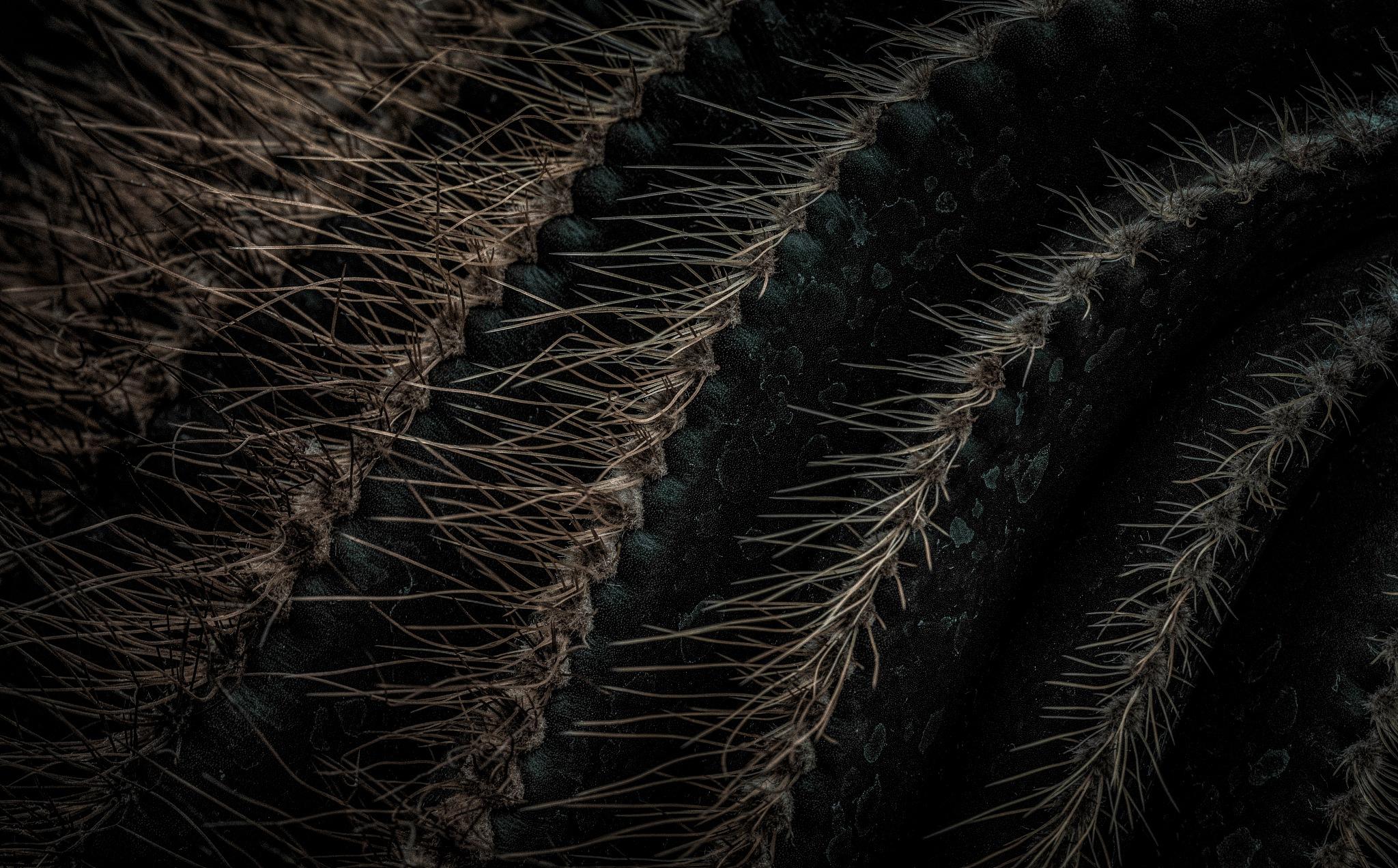 Cactus Magic 39 by JohnEllingson