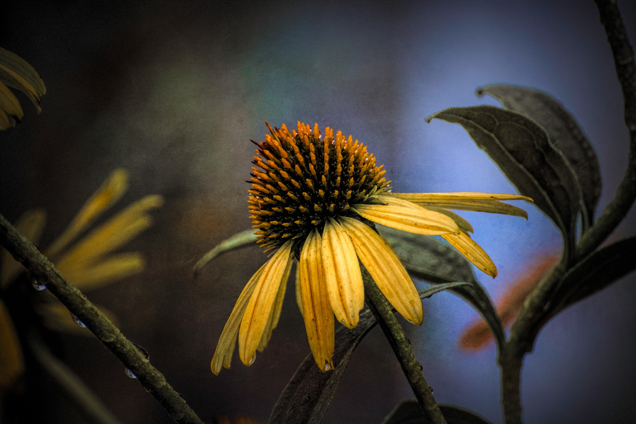 Flower 9-2-16 by JohnEllingson