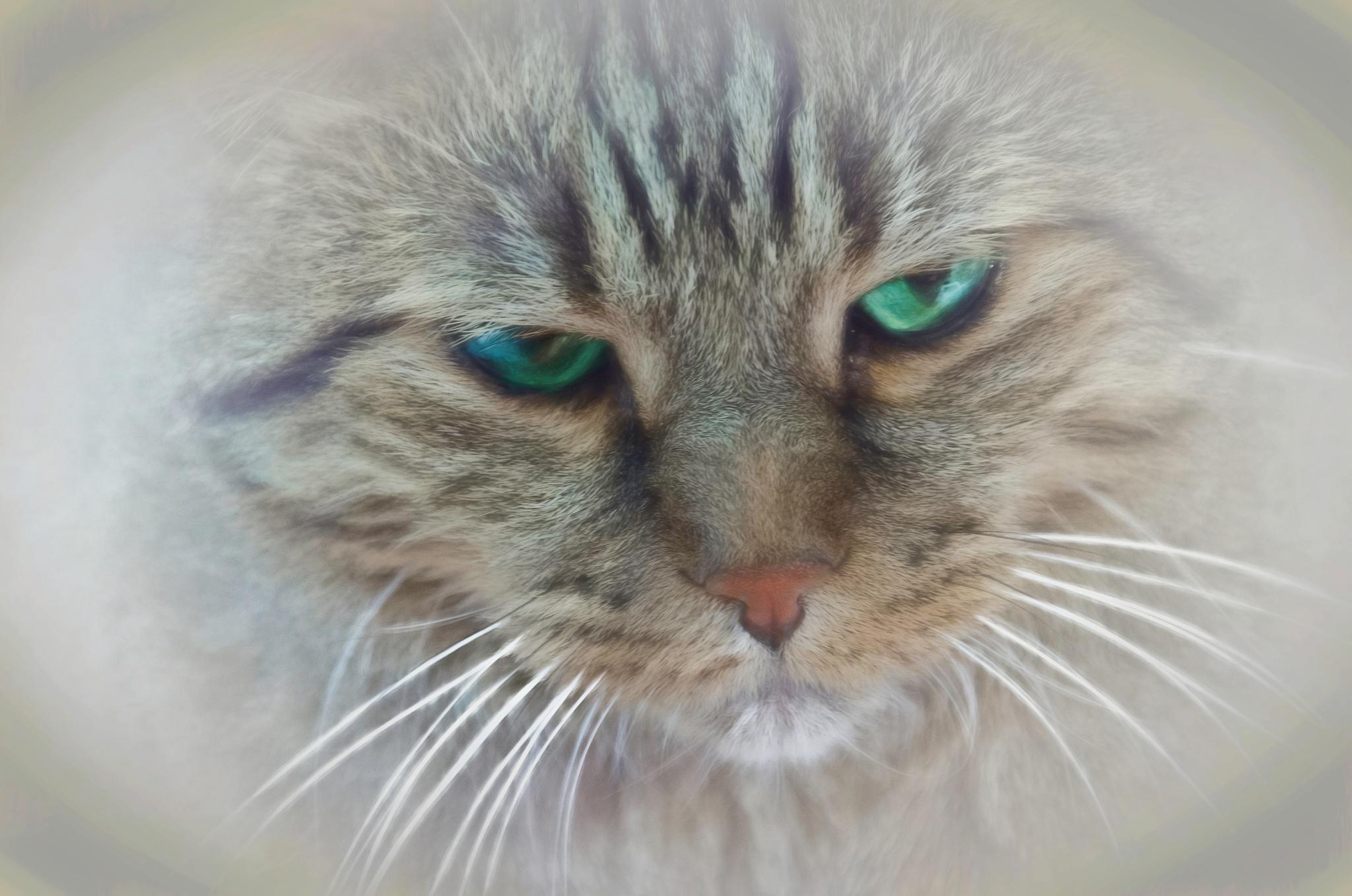 Cat Portrait 4 by JohnEllingson