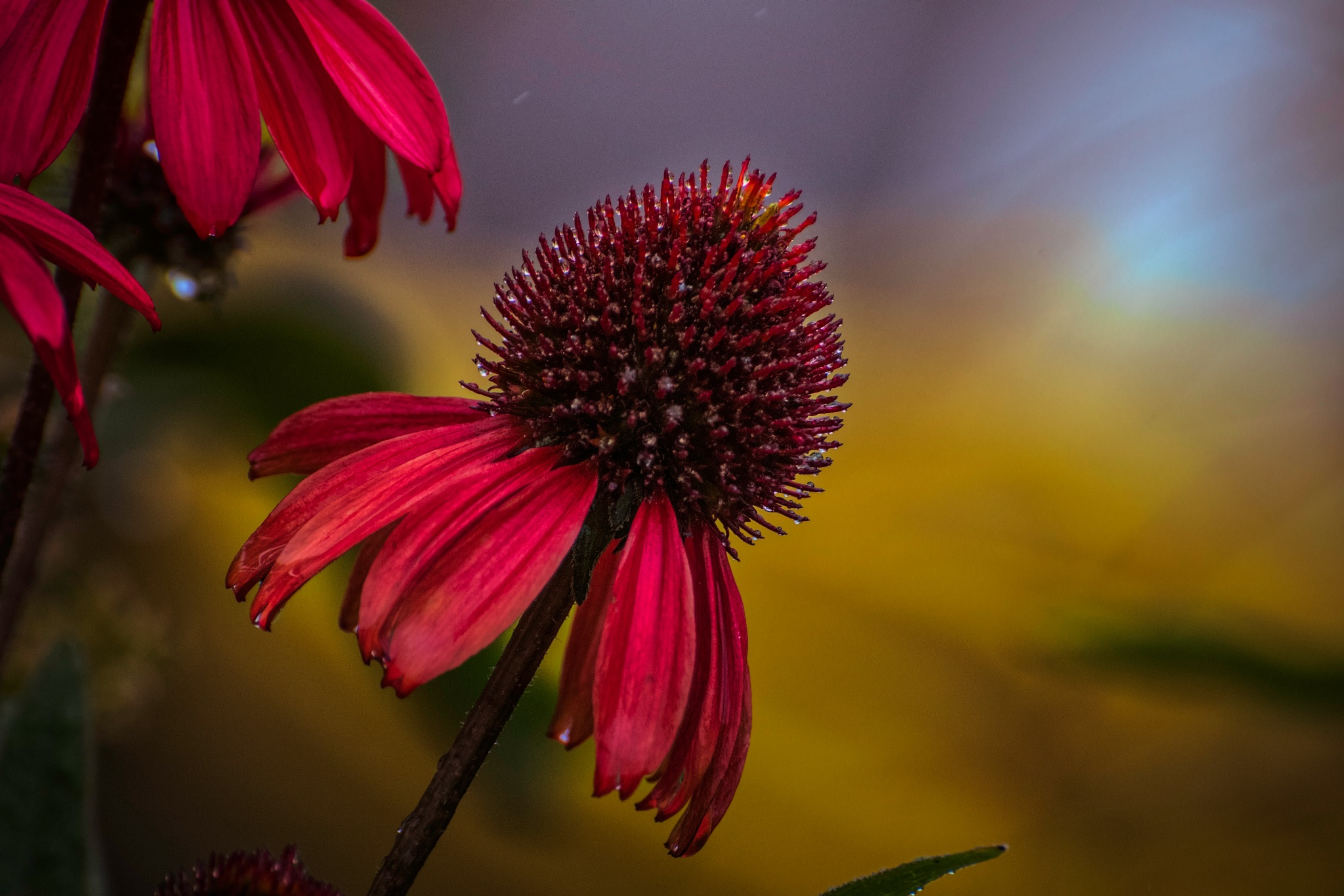 Flower 9-2-14 by JohnEllingson