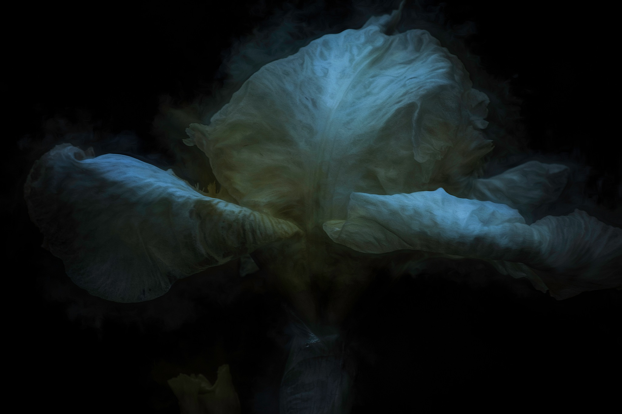 Late Iris 15 by JohnEllingson