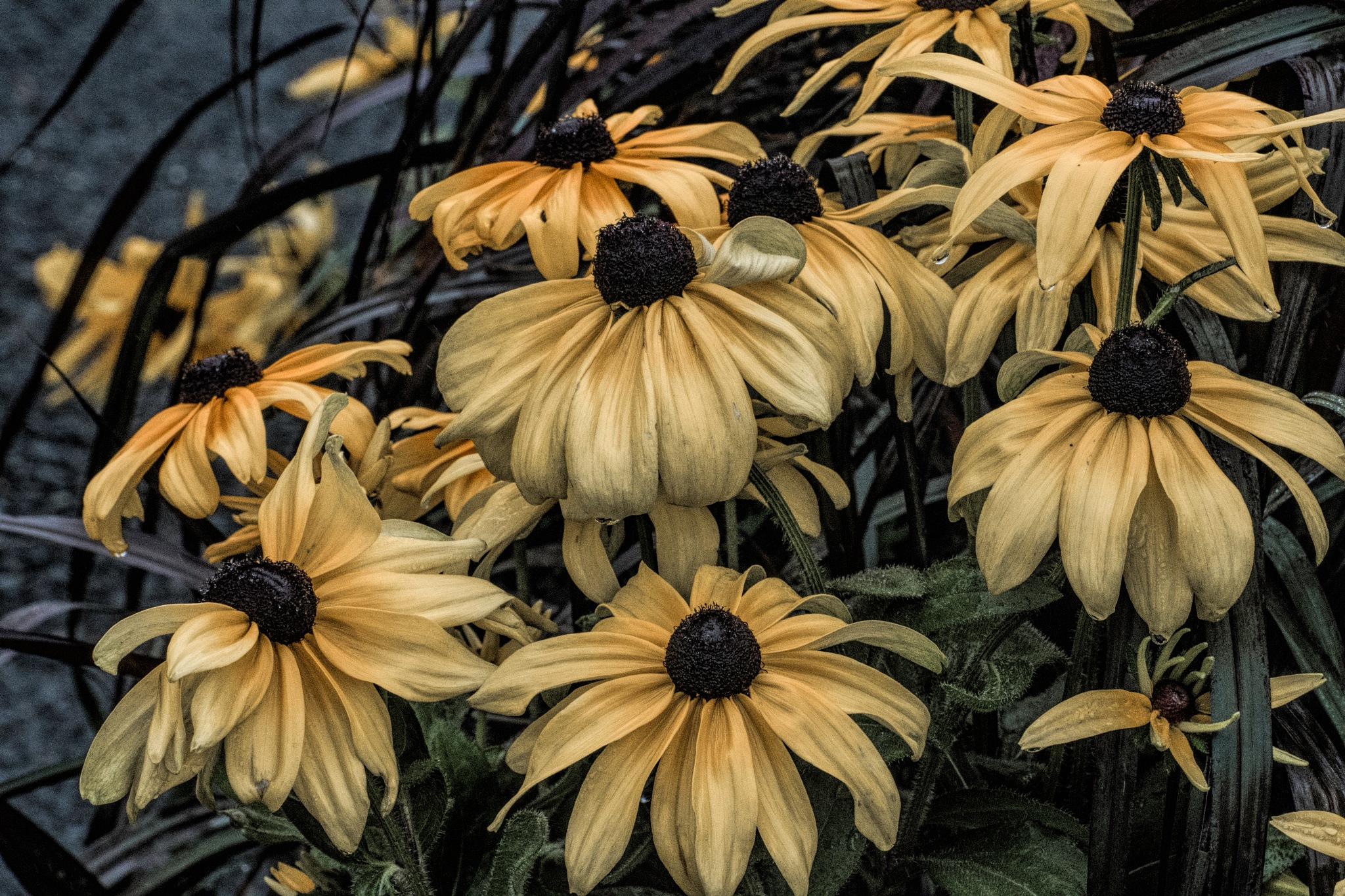 Flower 9-2-29 by JohnEllingson