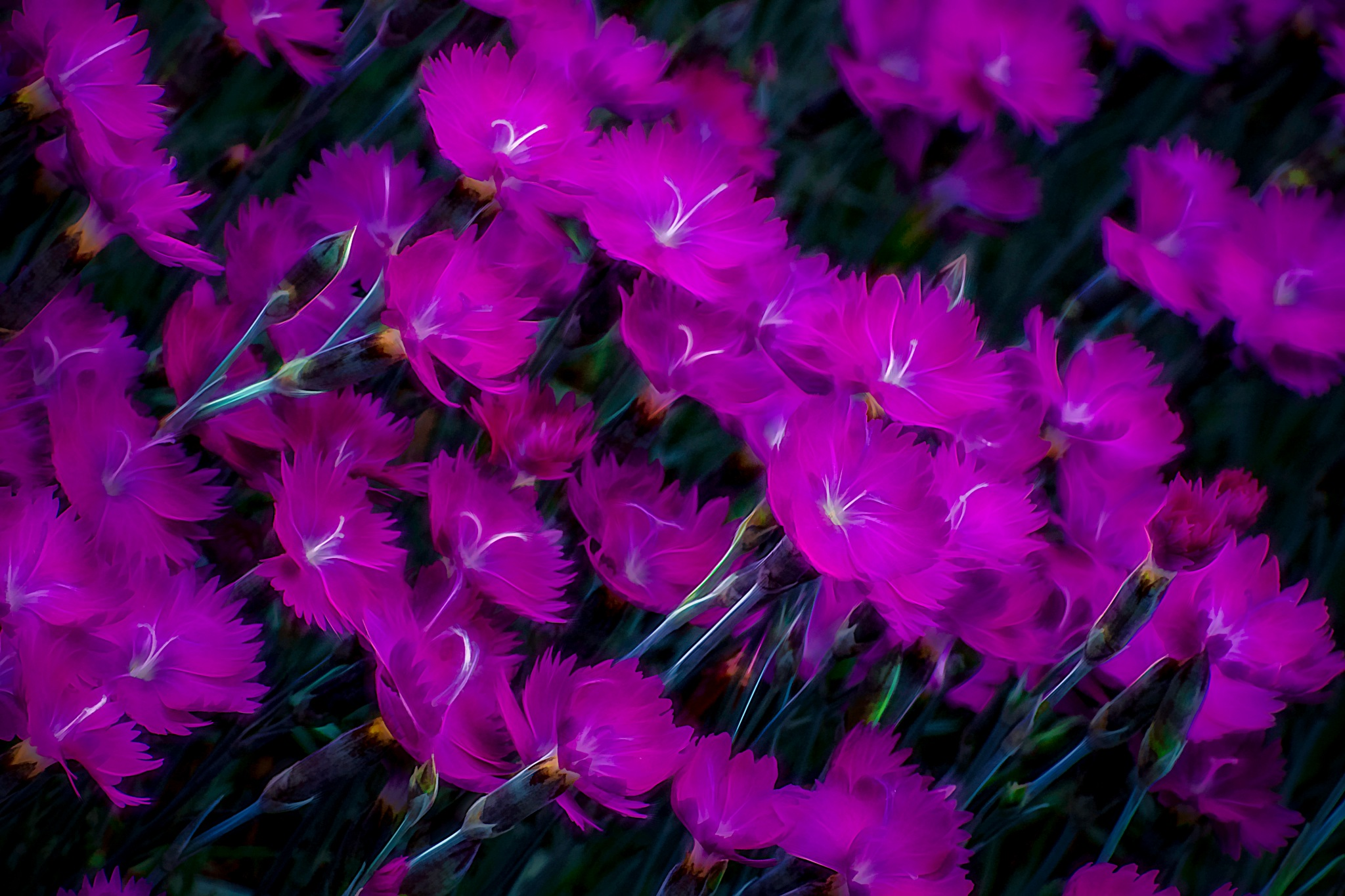 Magenta by JohnEllingson