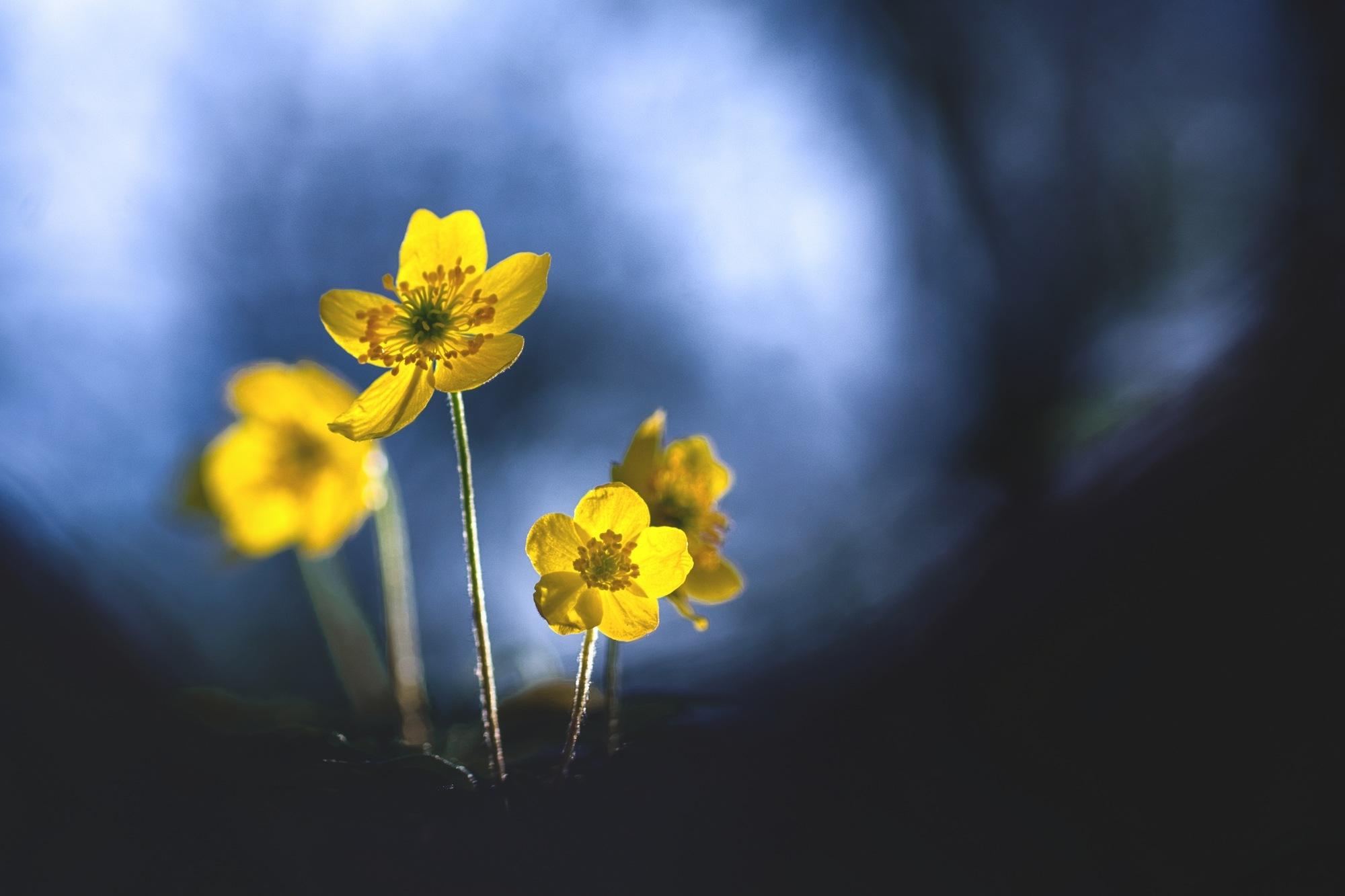 Sunny flower by donlope