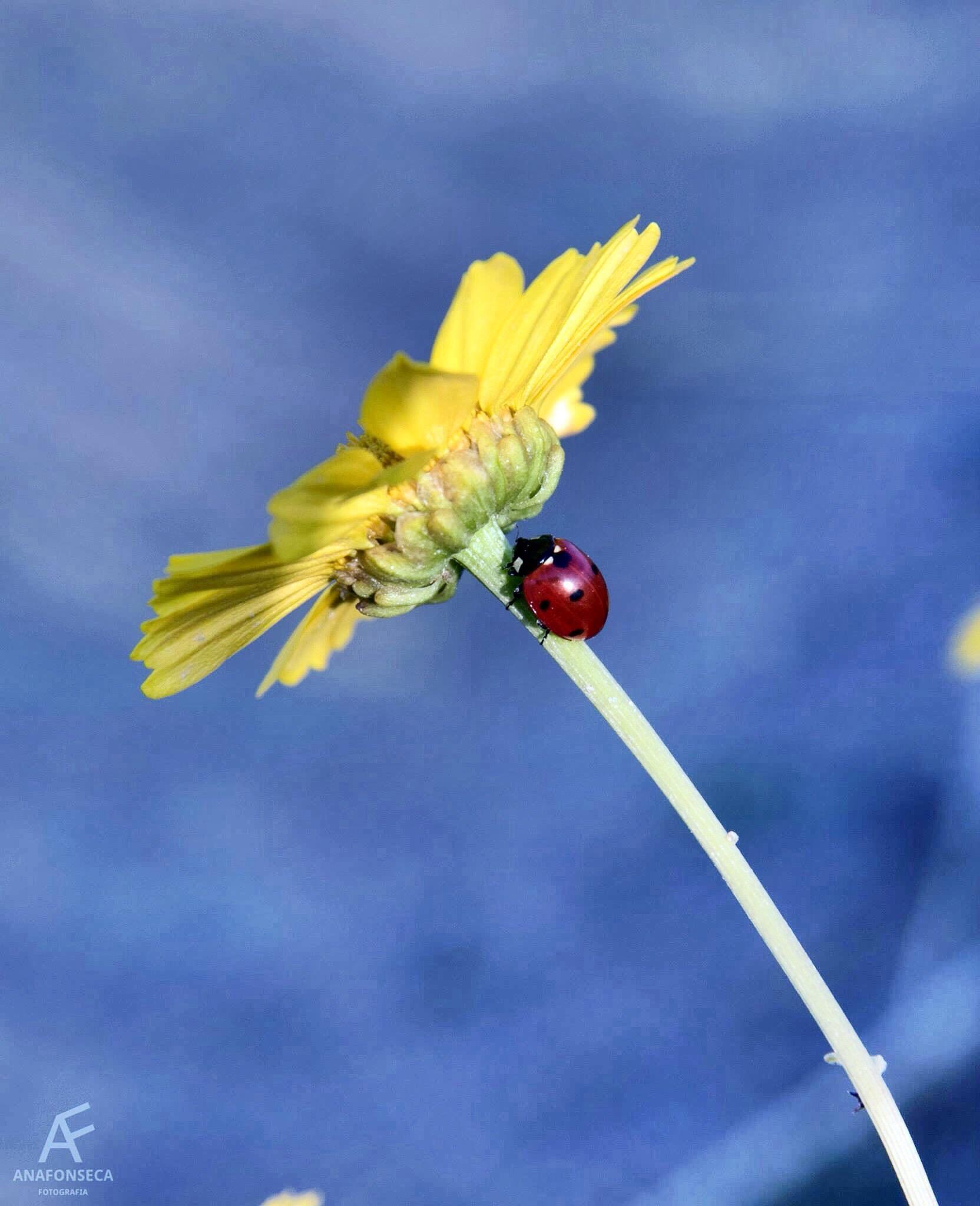 Yellow flower by Ana Paula Fonseca