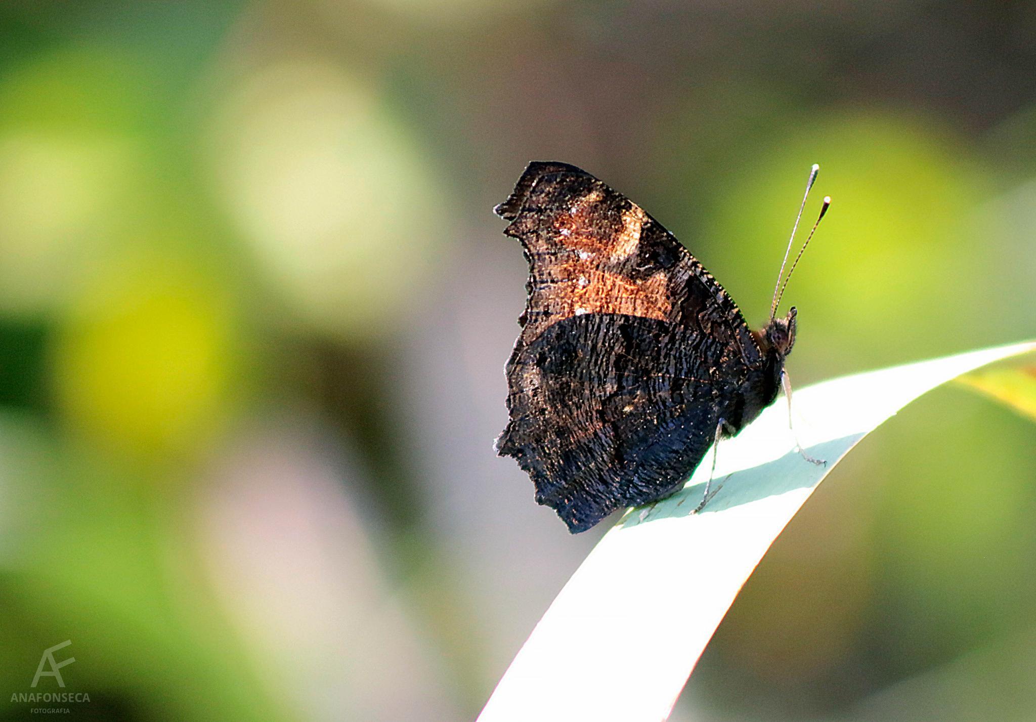 Butterfly by Ana Paula Fonseca