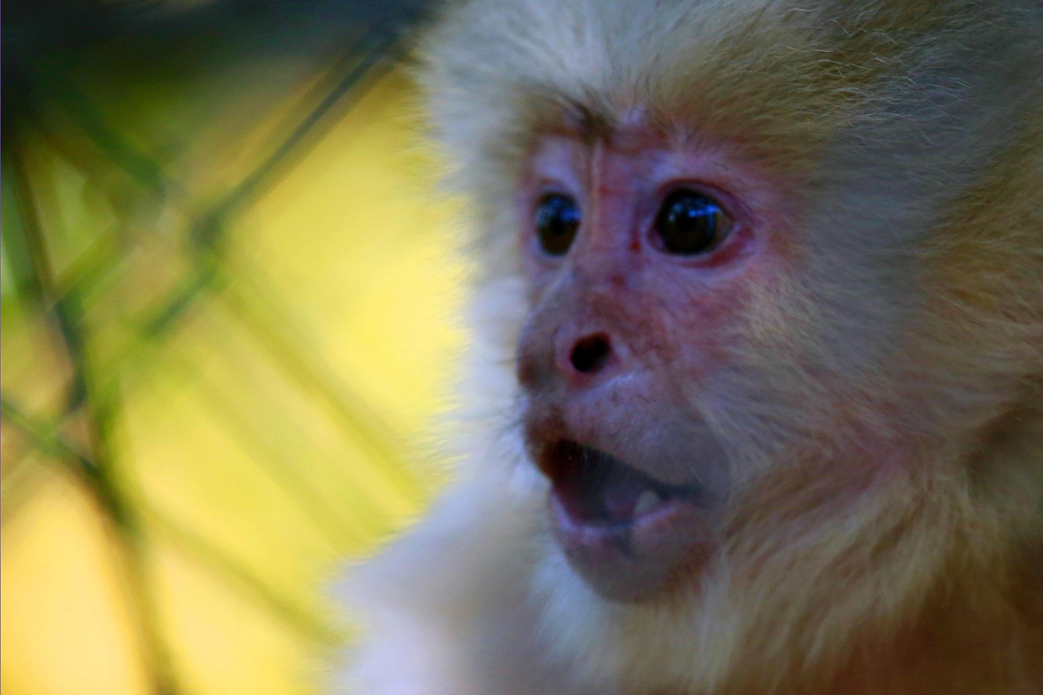 Surprised Monkey by Jason R. Rich