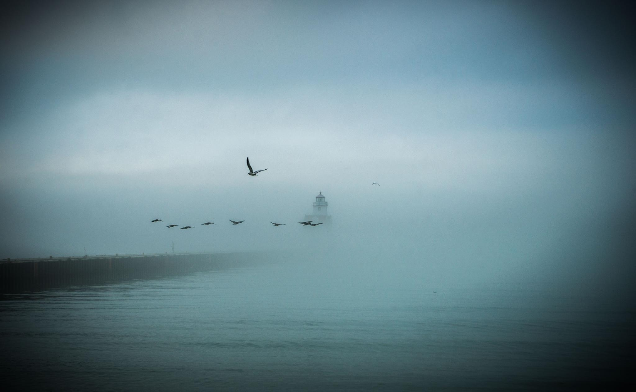 Photo in Landscape #fog #lighthouse #birds #water