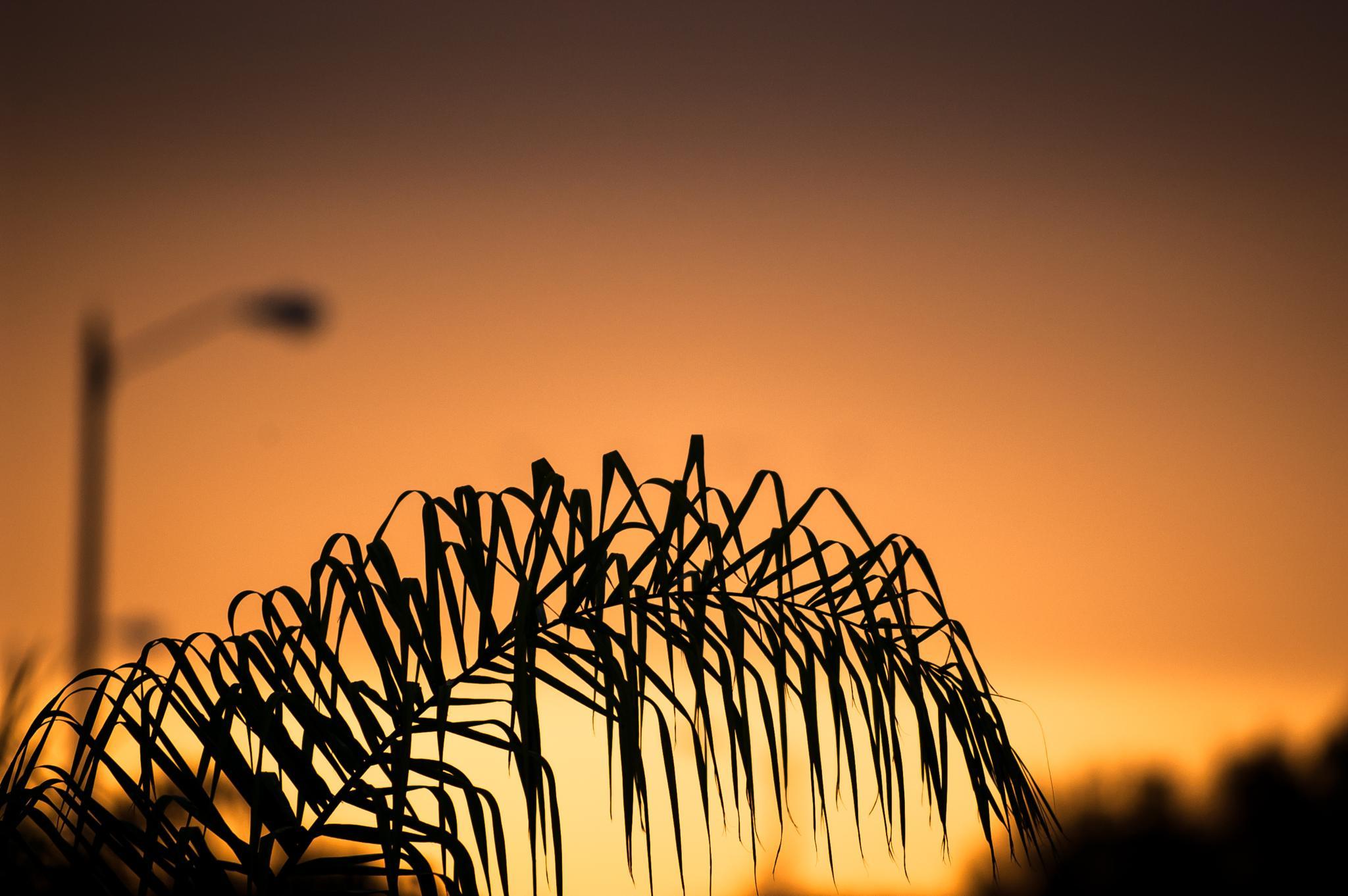 Photo in Landscape #palm #leaf #sunset #landscape