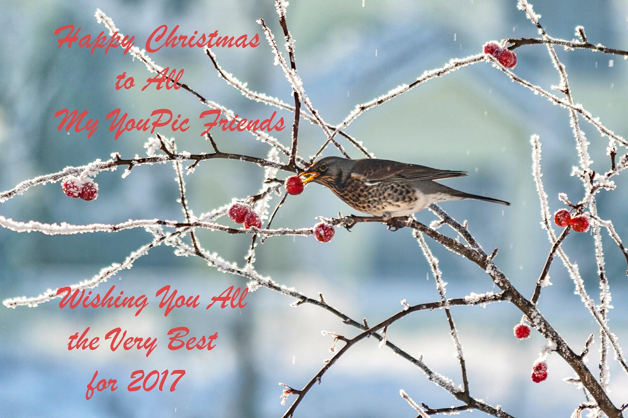 Christmas Greetings by Declan Byrne
