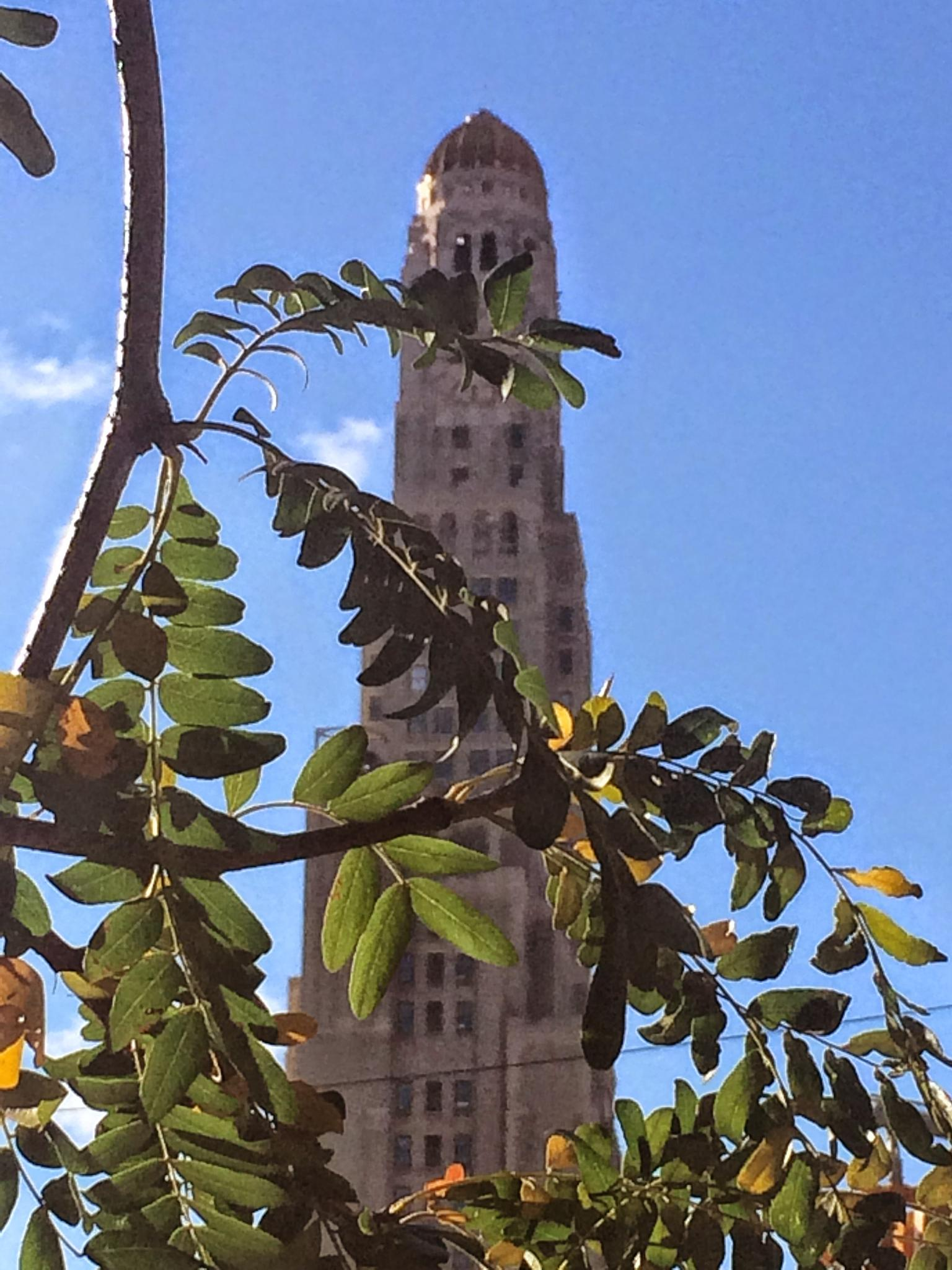 Clocktower Building through tree branches by Owen Kelly