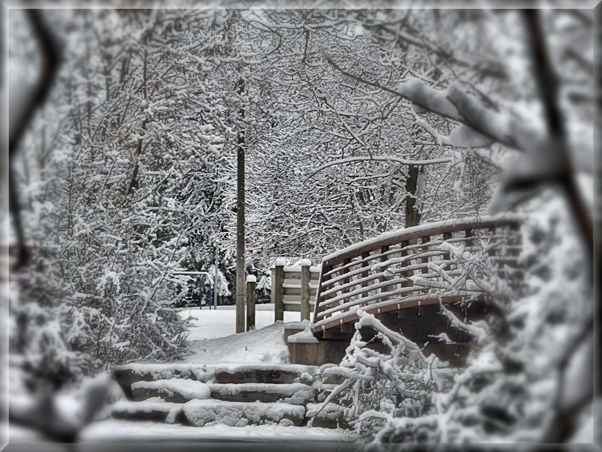 Photo in Landscape #winter #ptbocarl