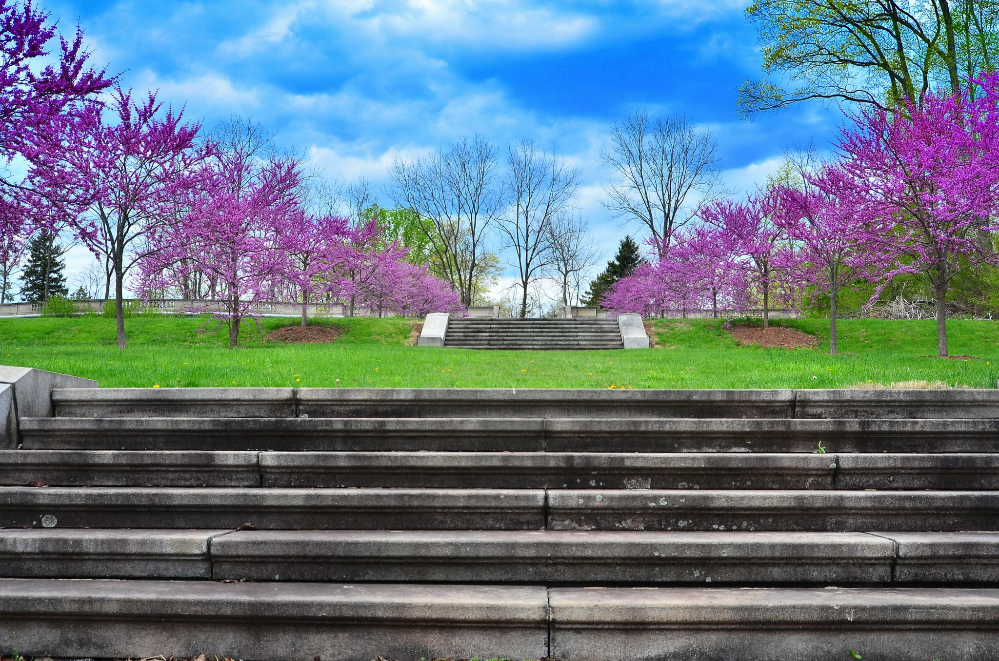 Photo in Landscape #park #steps #clear #colorful #nice