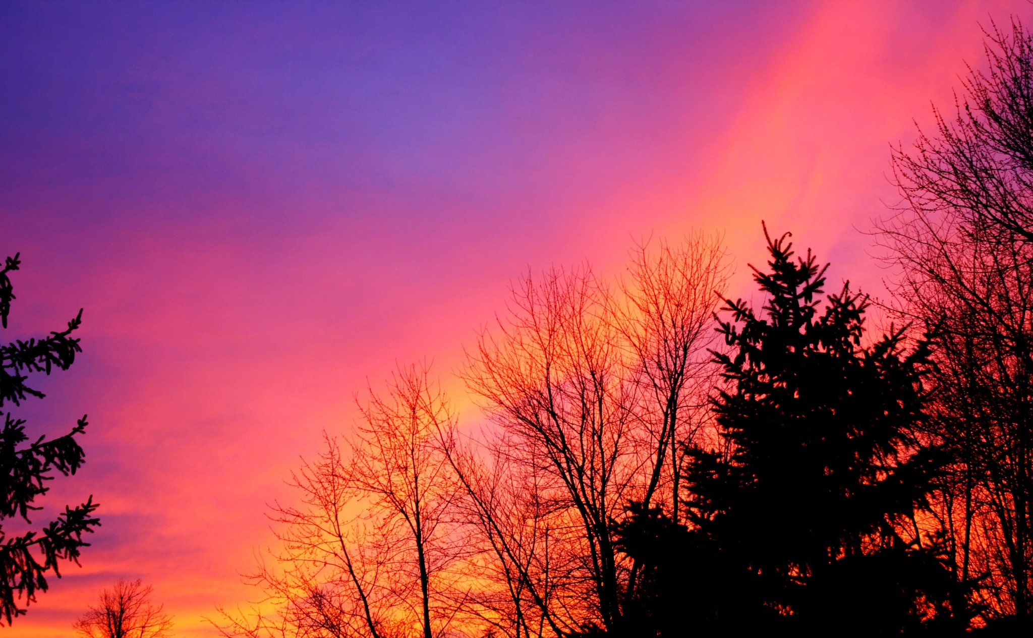 Backyard Sunset by JackieandTom Daunce