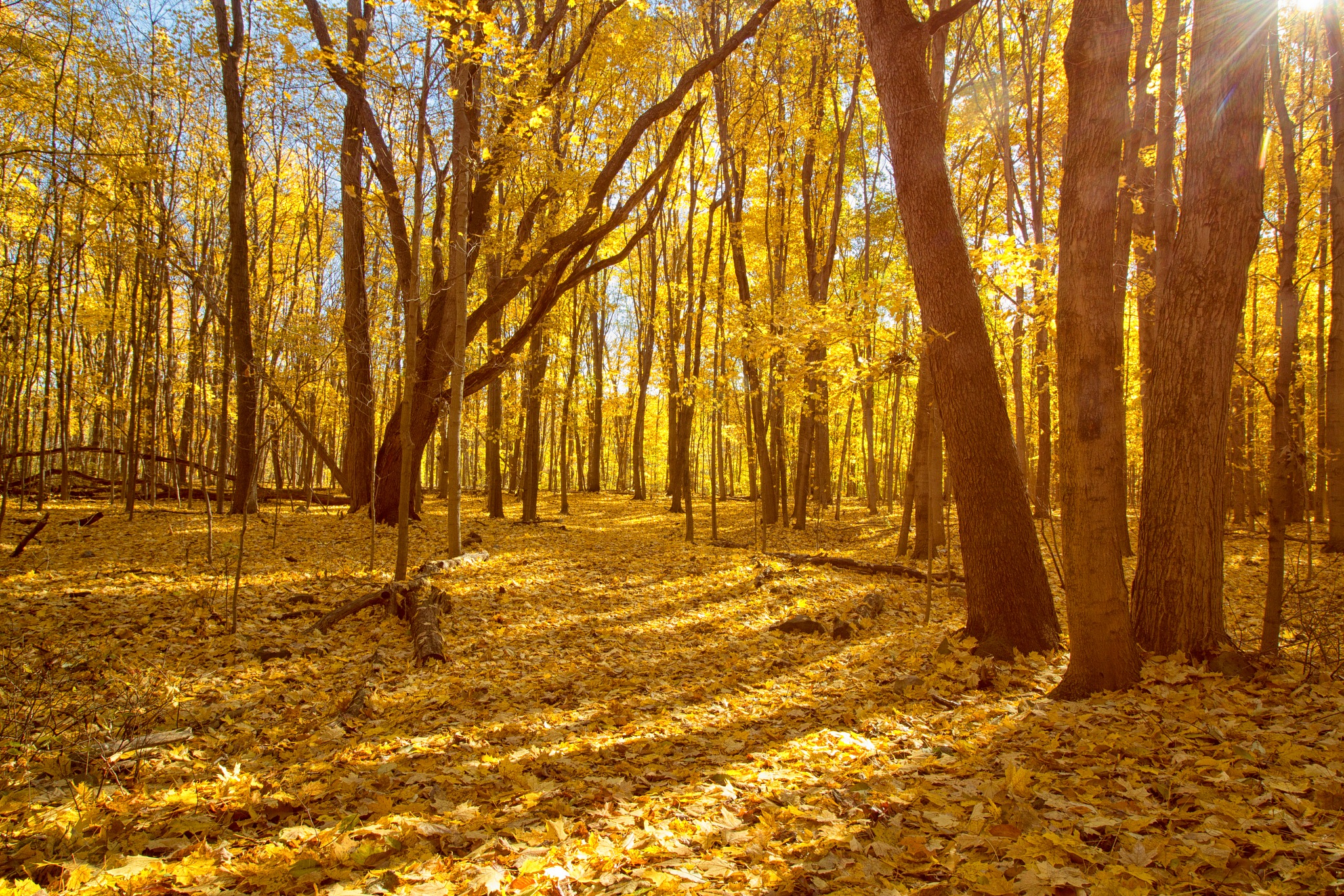 Photo in Nature #autumn #fall #color #leaves #woods #nature #park #hiking trail #ground cover #sunshine