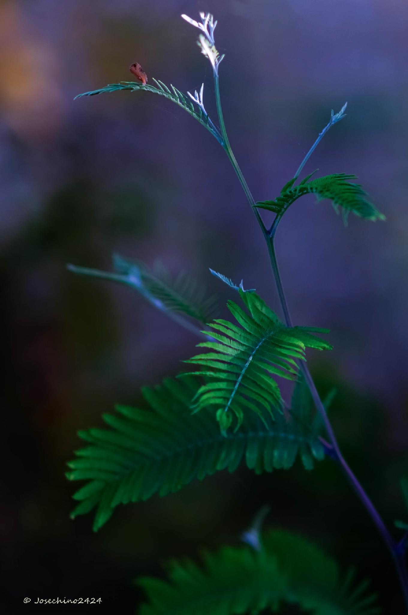 Photo in Nature #luz #hojas #verdes #color #desenfoque #josechino2424 #135mm