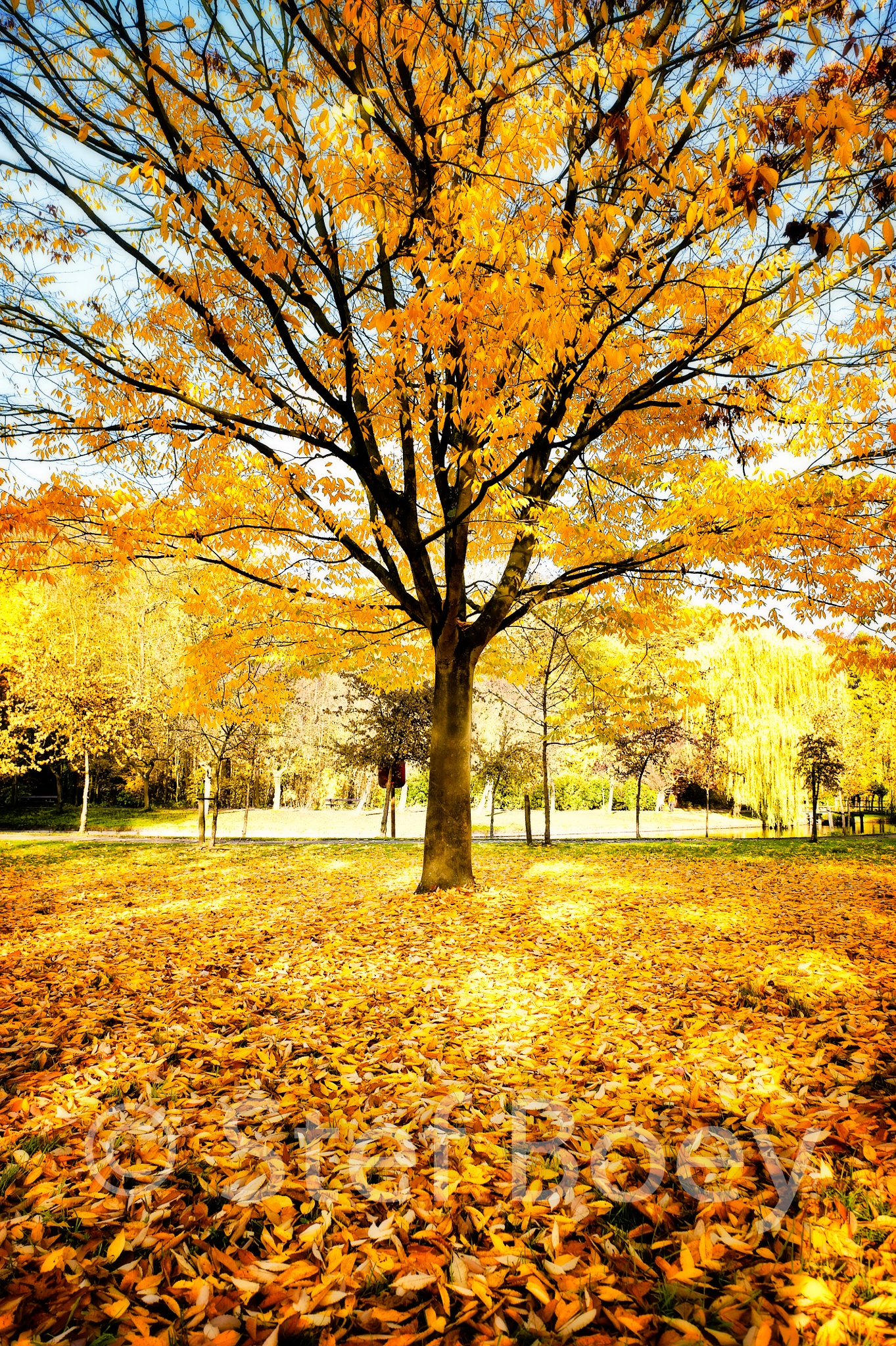 Autumn Colours by Stef Boey