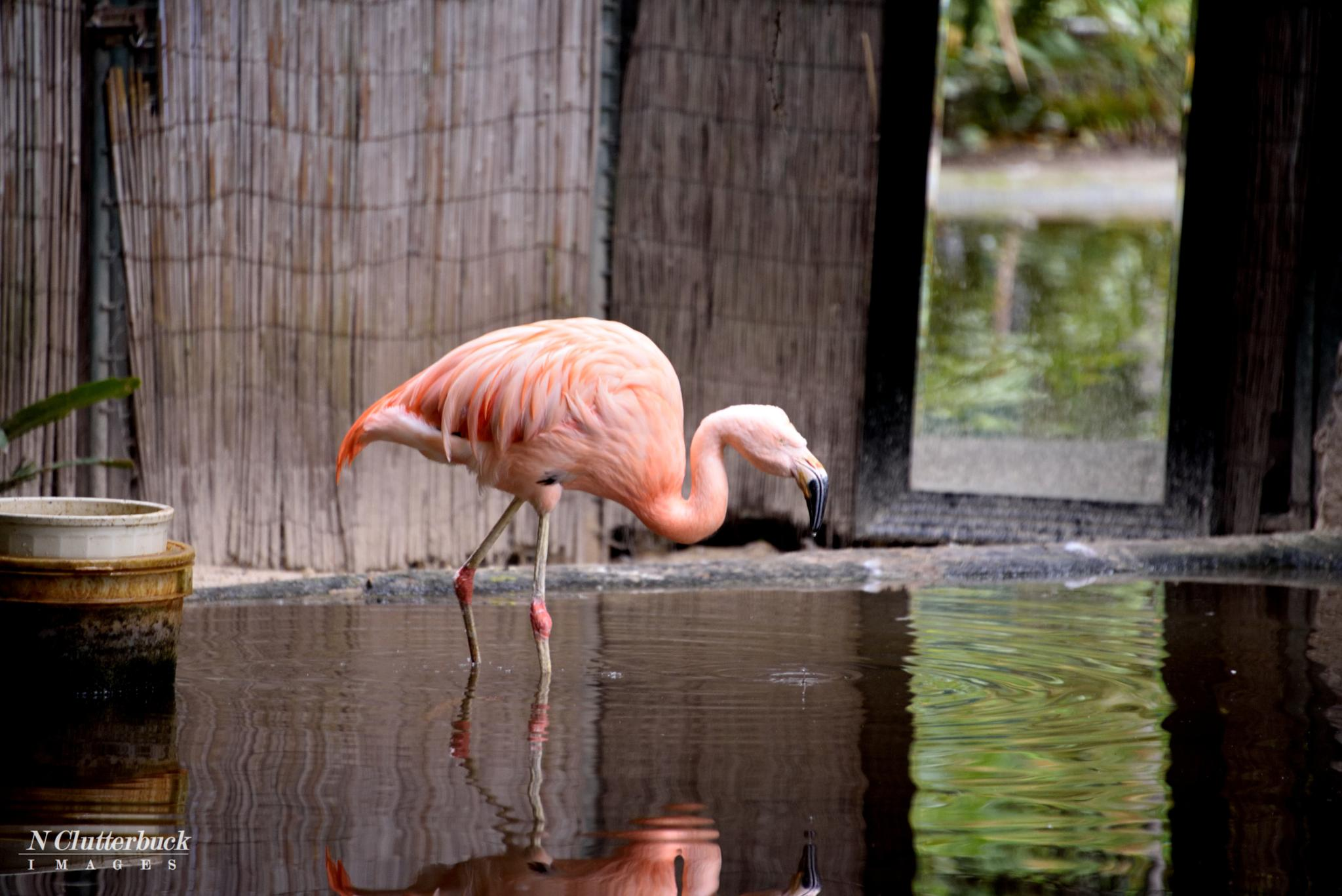 Photo in Animal #flamingo #bird #zoo #adelaidezoo