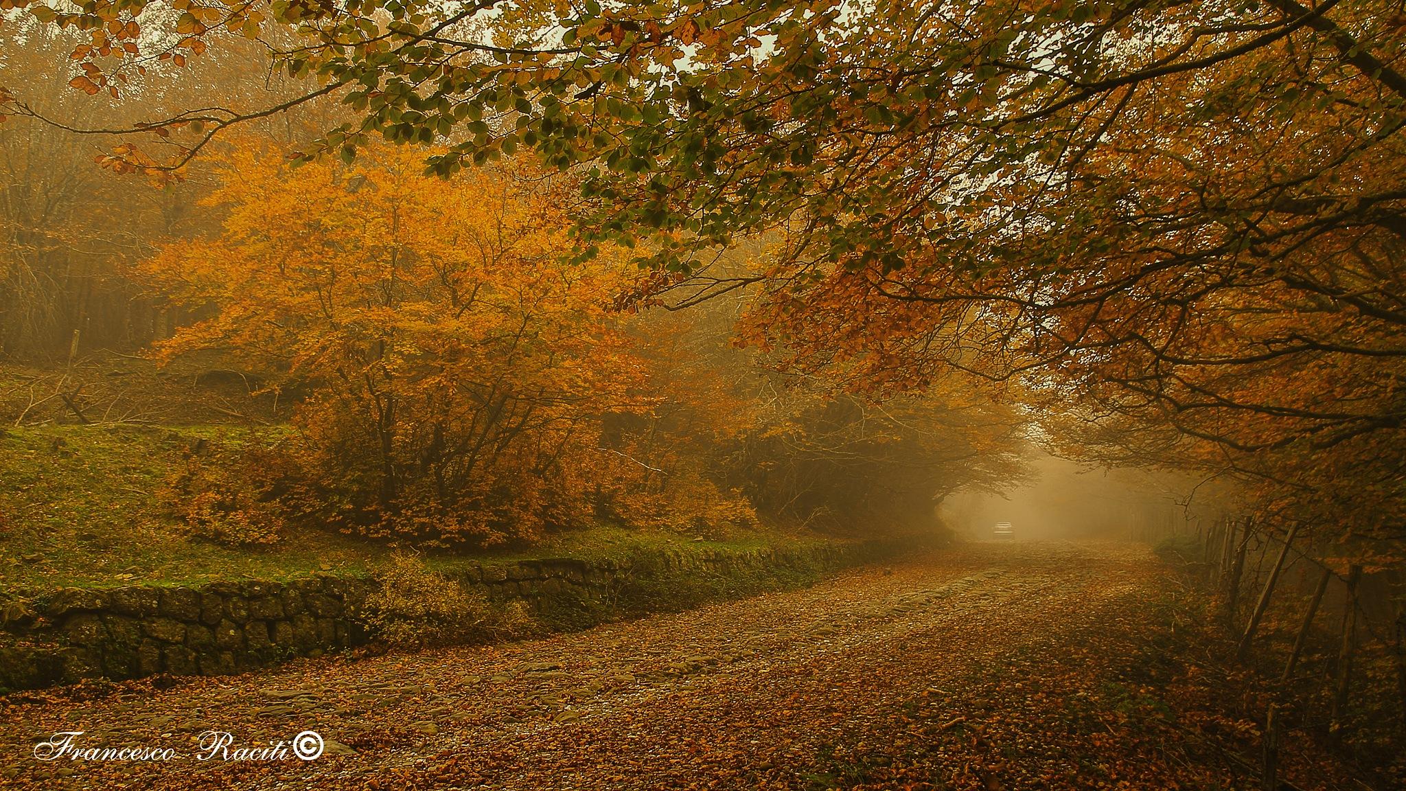 Autumn by Francesco Raciti