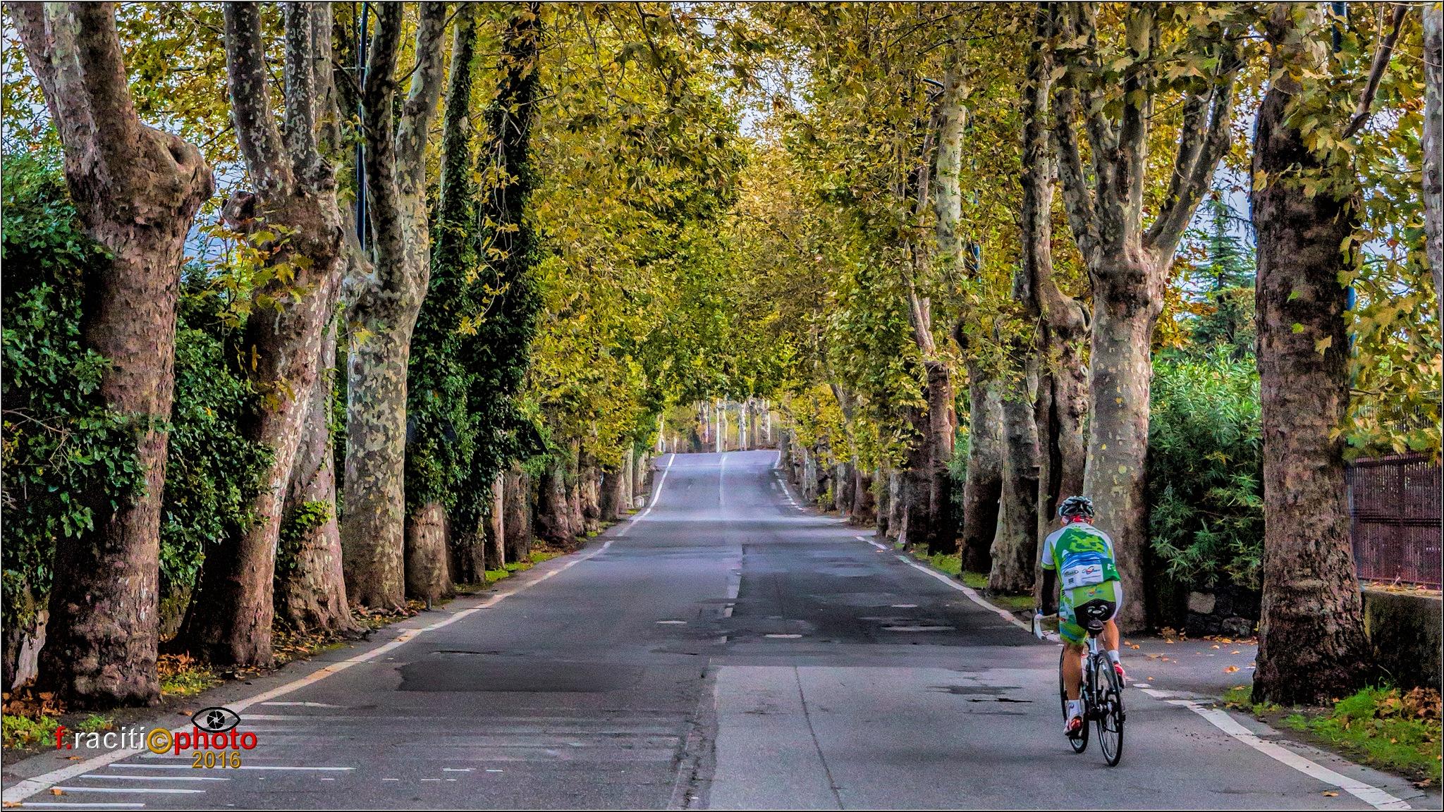 cyclist by Francesco Raciti