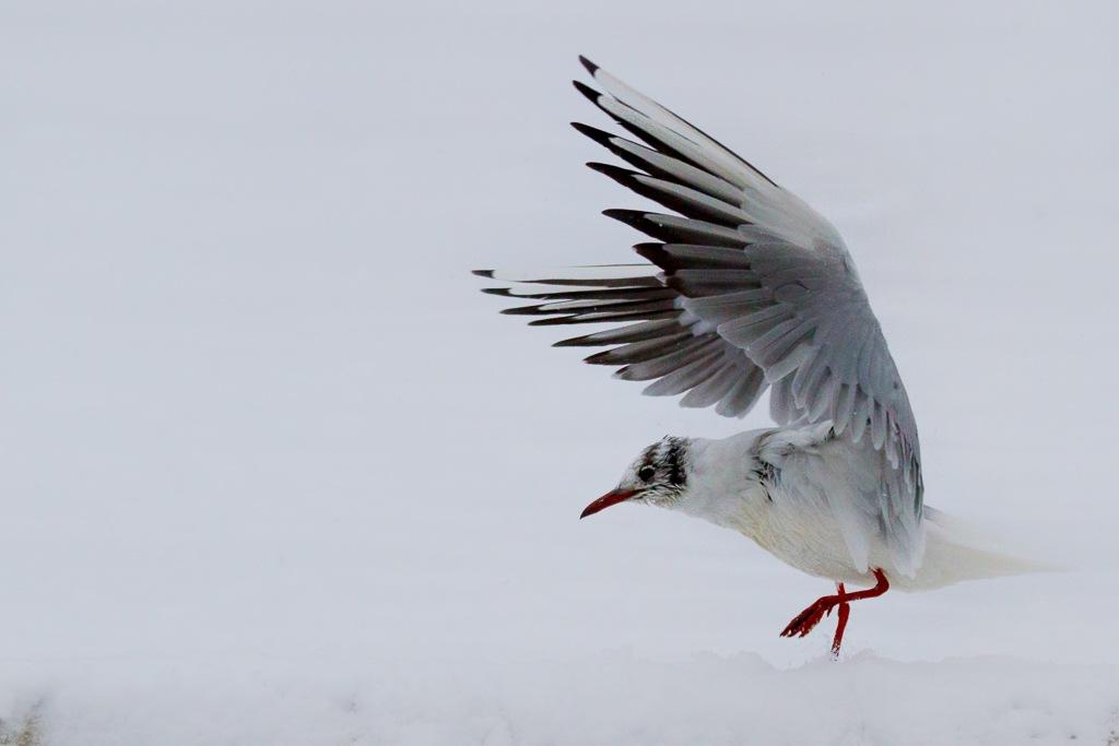 Wings by David Philipp
